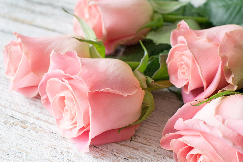 картинка на рабочий стол розы нежные розы дневное