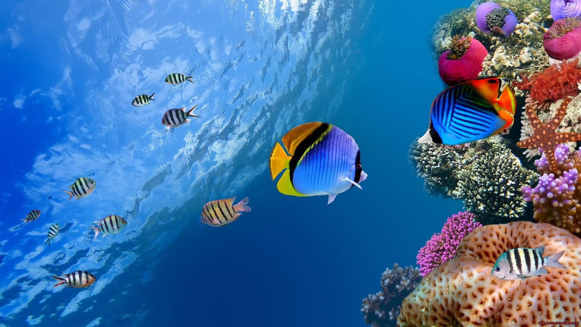 что такое бейдж барьерный риф мужчина наденет