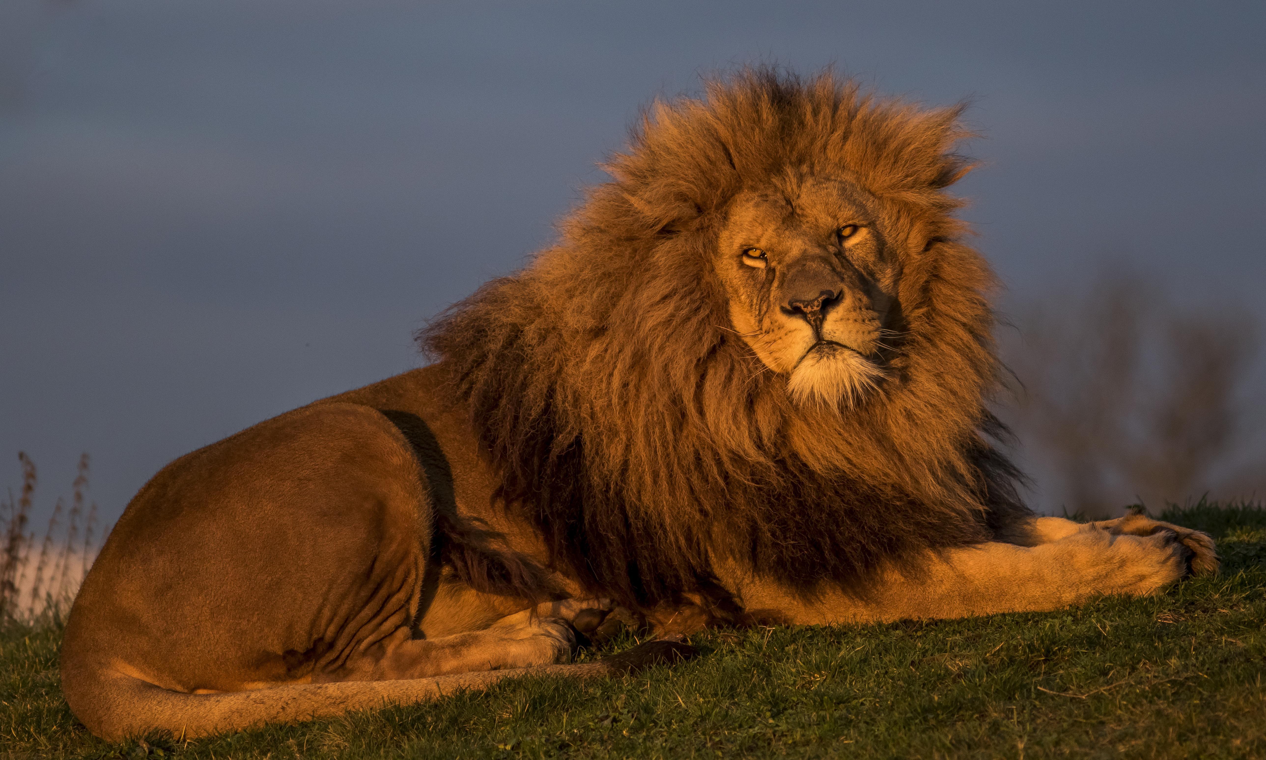 загрузить фото львов рамка