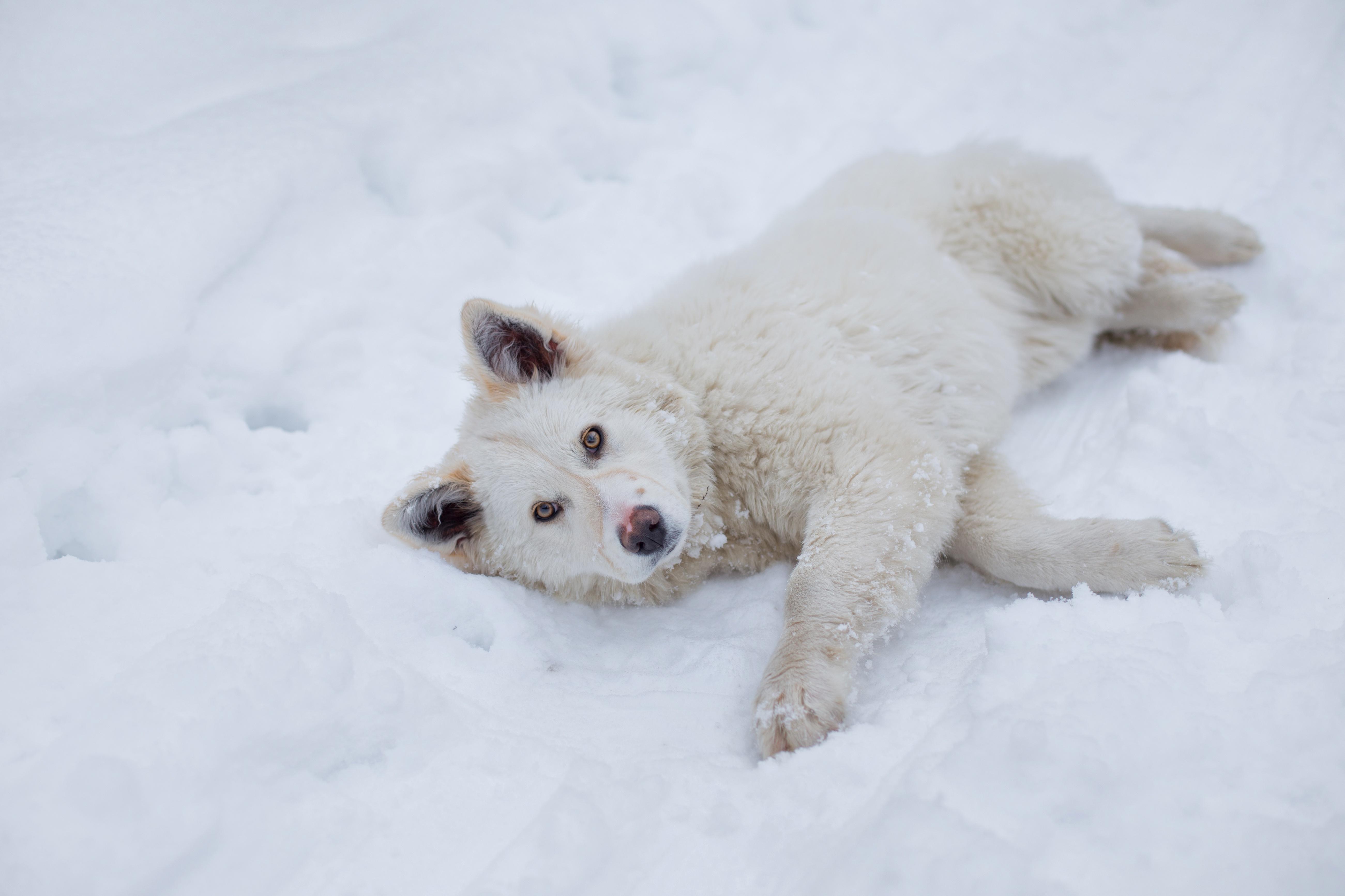 интернет-магазине фотки собачки в снегу сочетание