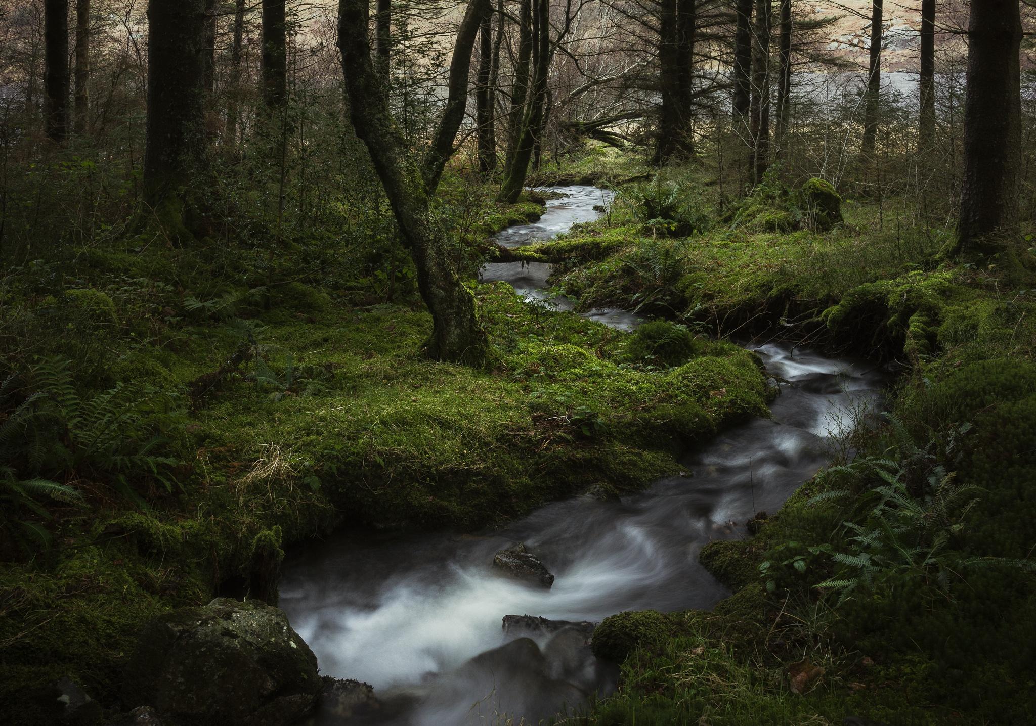 Картинка ручеек в лесу