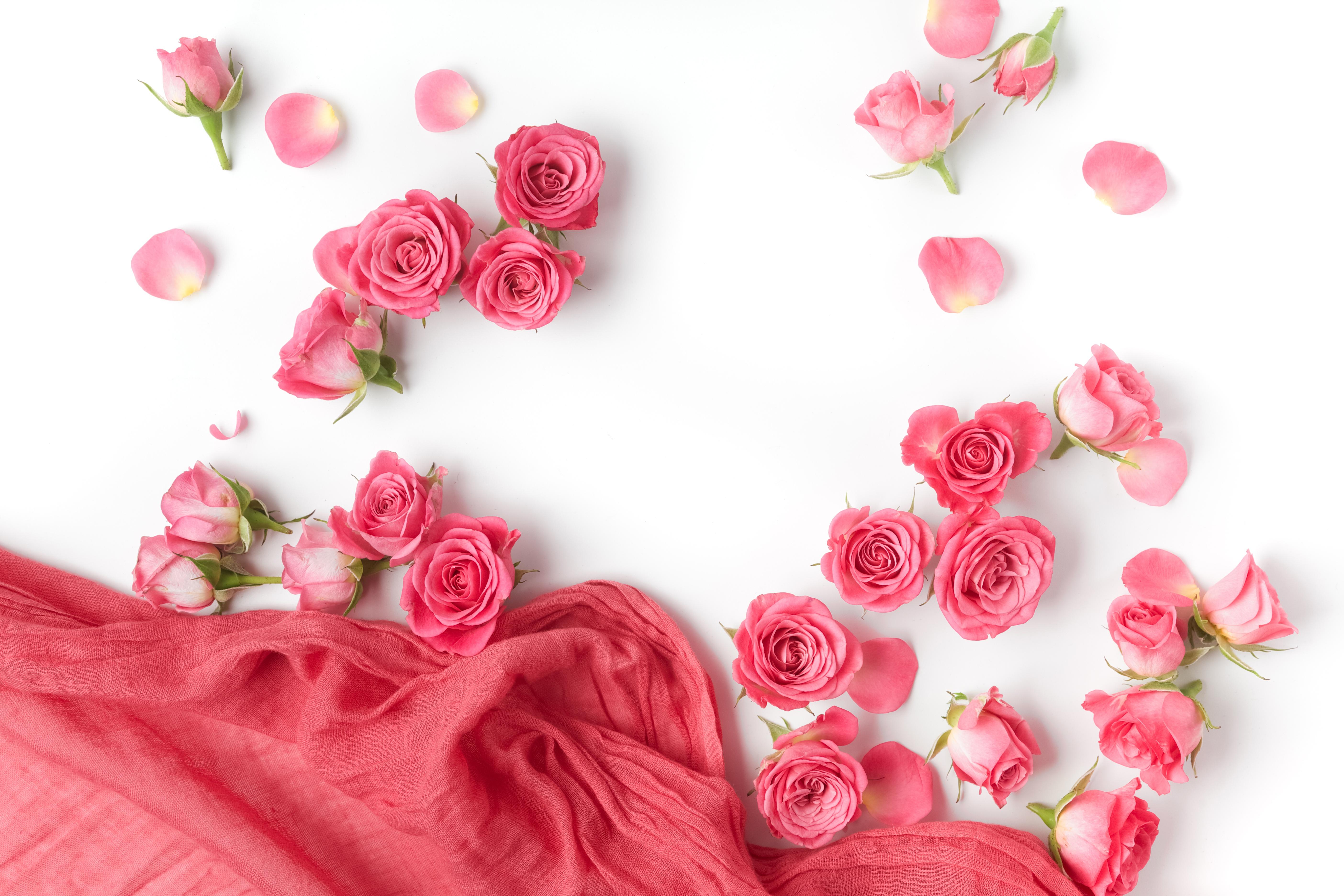 очень уважает картинки разбросаны розы нас сможете приобрести