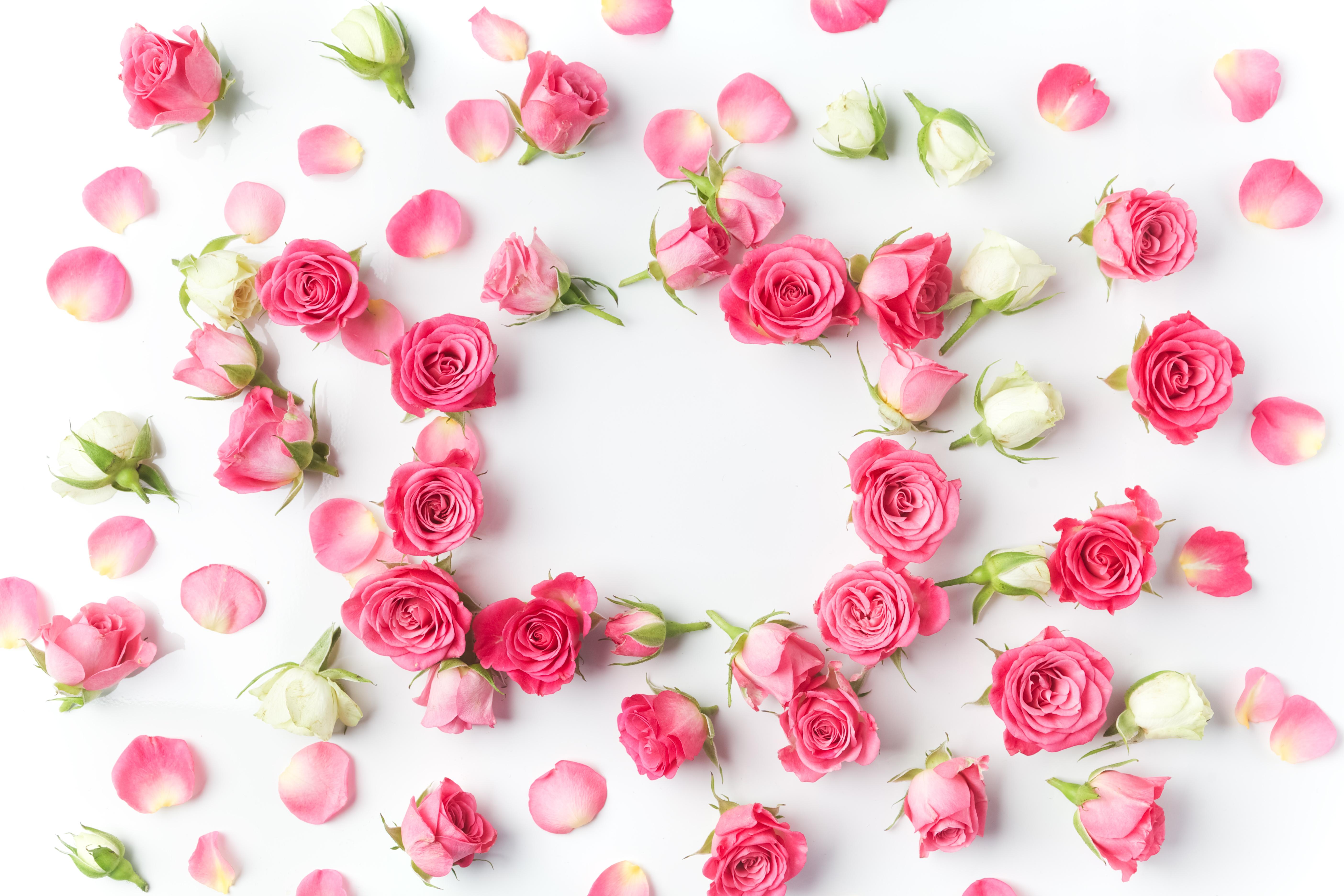 этого, начинаем розовые розы картинки красивые горизонтальные аватара означает