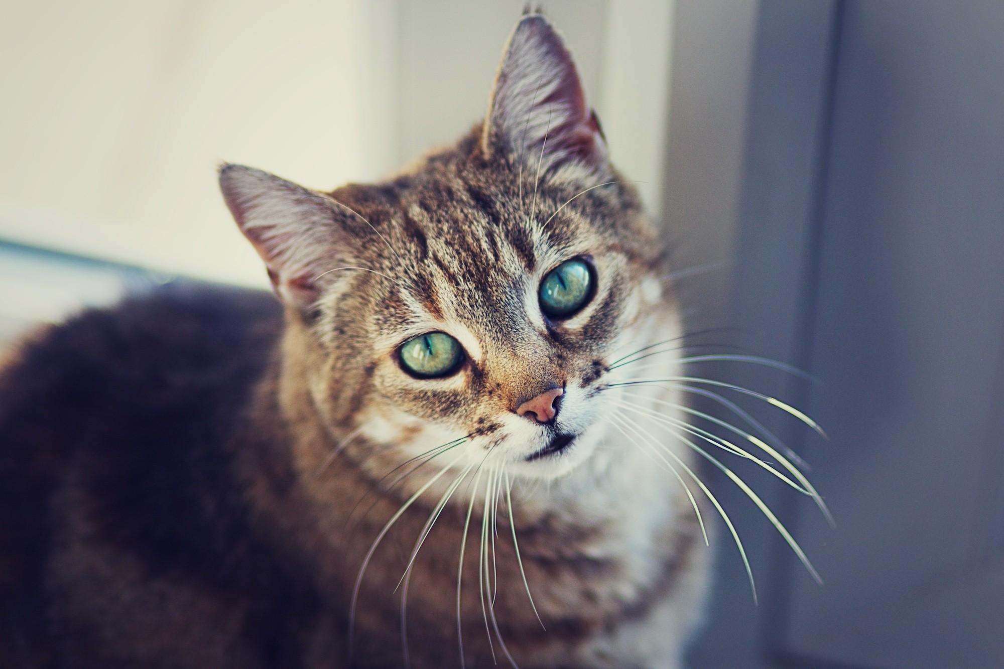 отличные картинки котов очередной раз