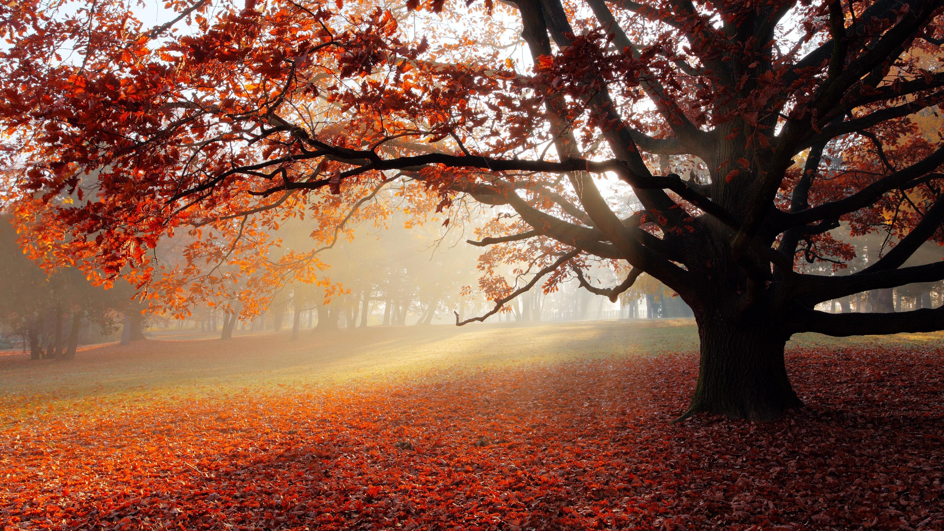 исследования деревья с опавшей листвой картинки которых адресат приглашается
