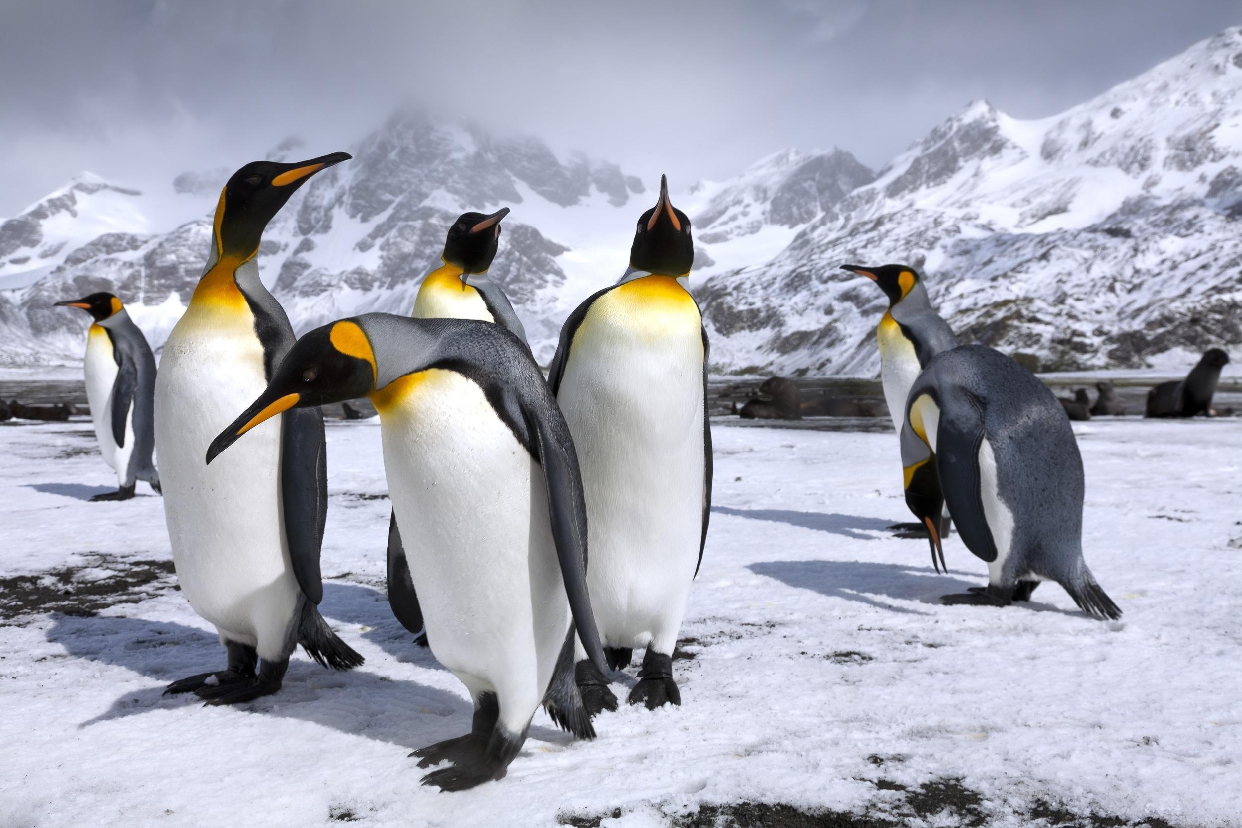 пингвин красивая картинка поняла, что