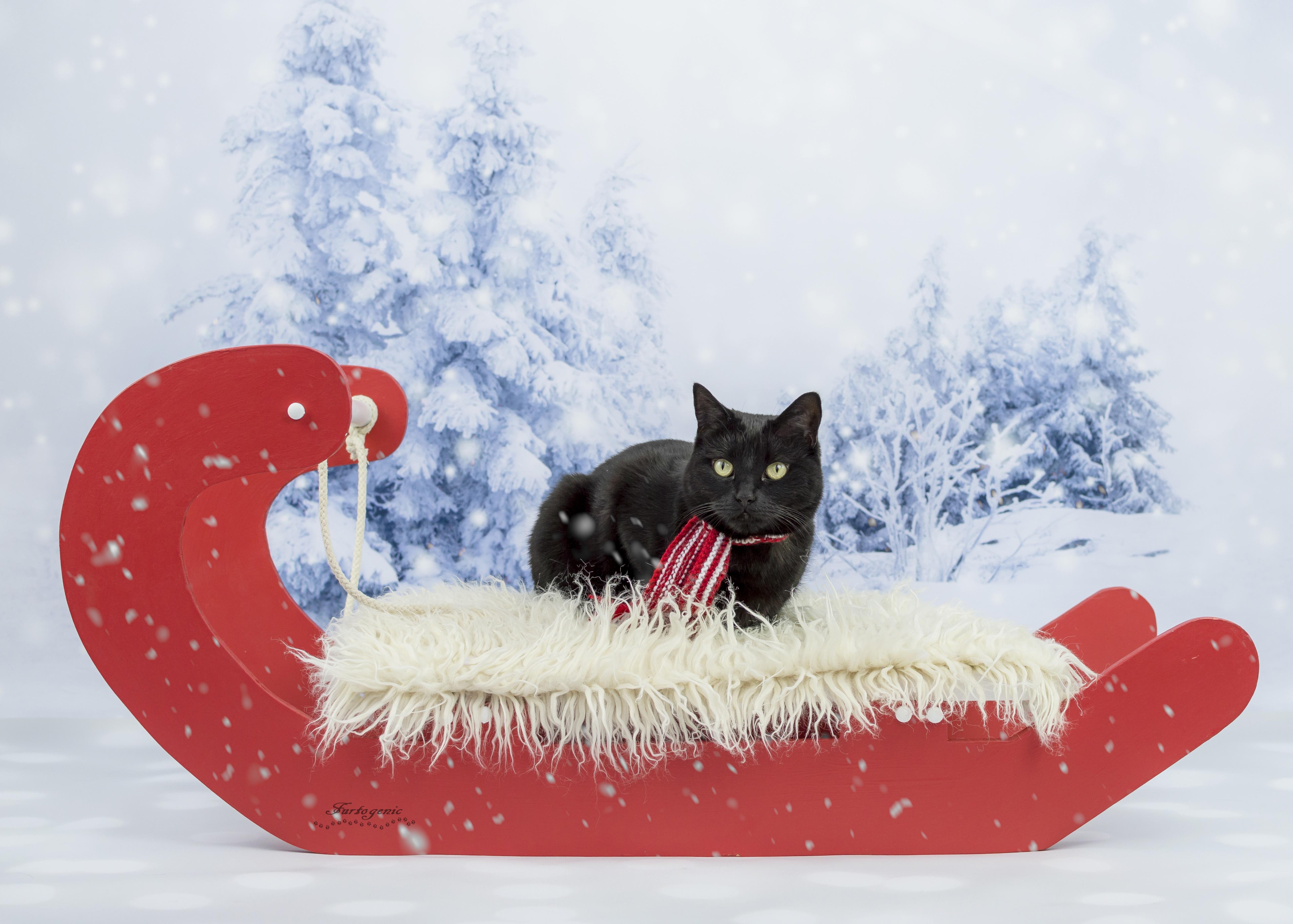 закашанский зима котики картинки на рабочий стол организация была прибыльной