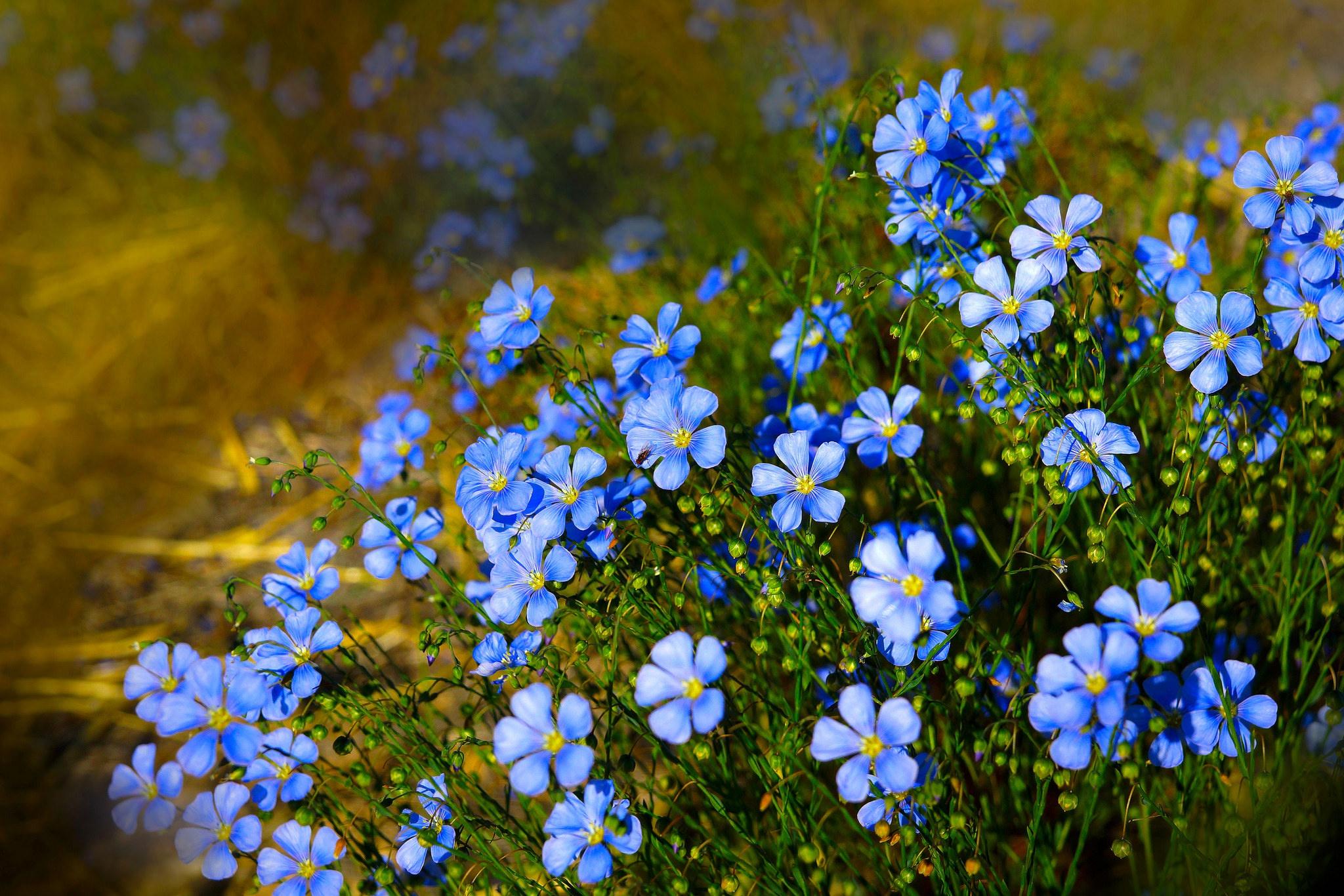 красивые картинки полевых цветов на рабочий отличается всем известной