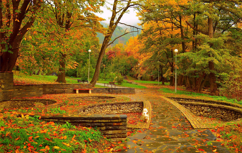 Осенние картинки парка