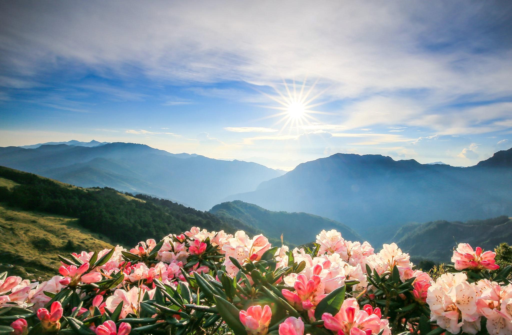 Картинки на рабочий стол цветы и горы