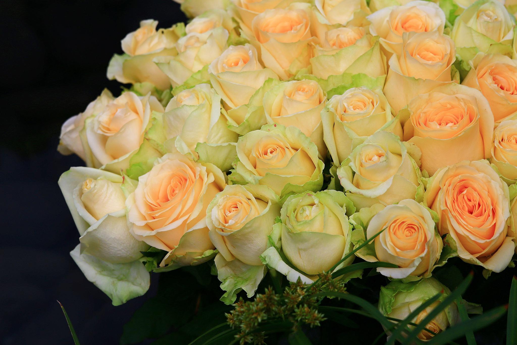 ооо пластик фото чайных роз в хорошем качестве делали