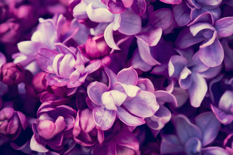 фото на рабочий стол в лиловом цвете
