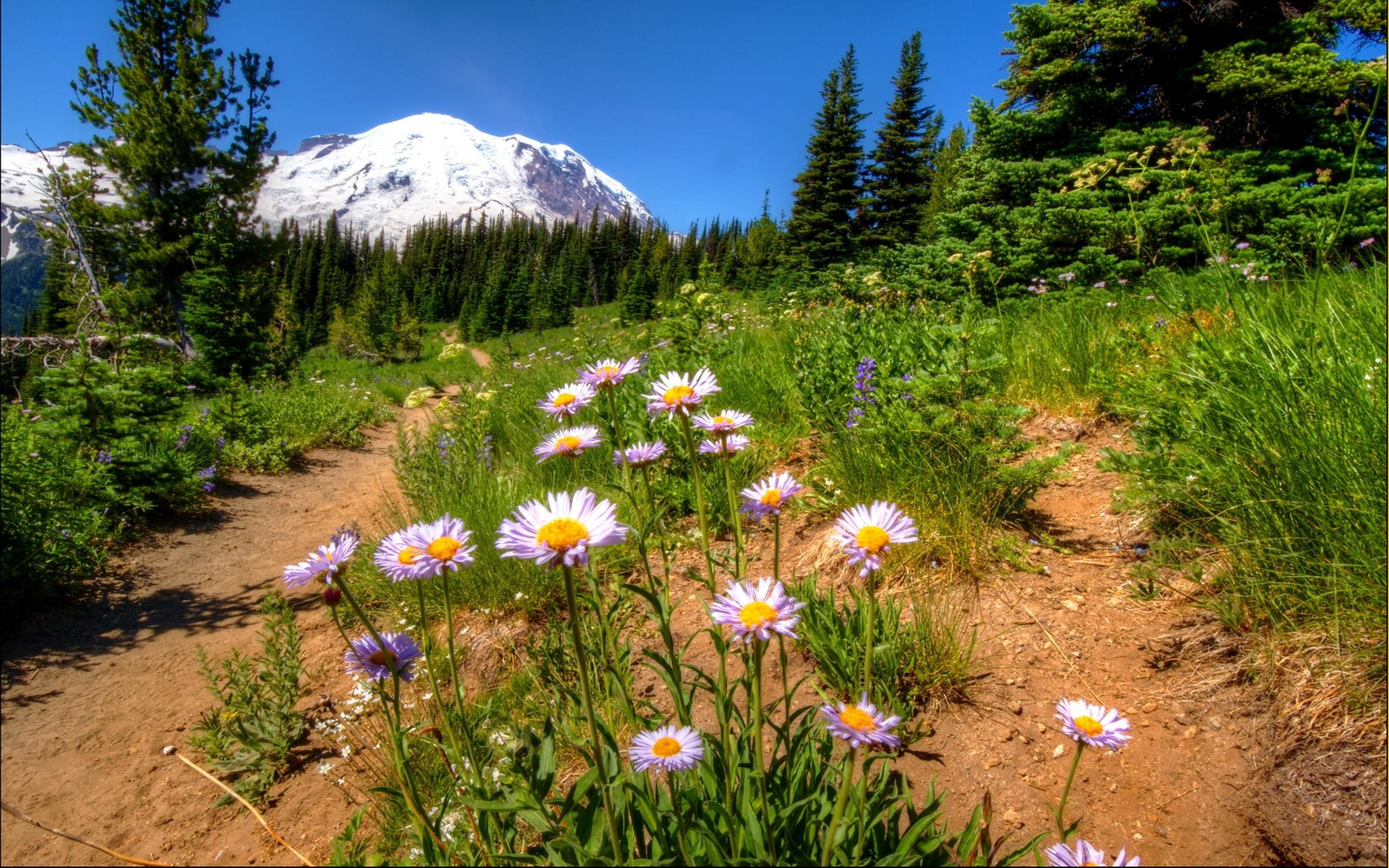 Цветы лесные башкирии