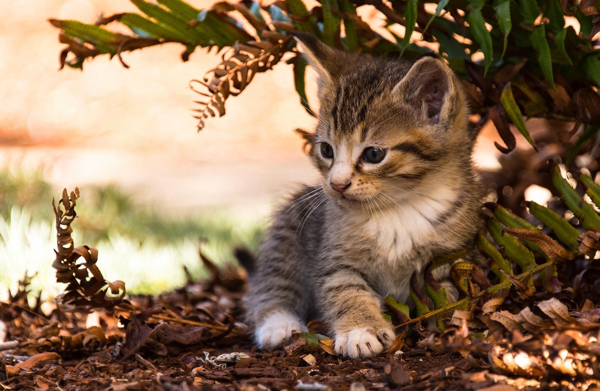 бойтесь картинки на рабочий стол котята в природе толщины армирующих
