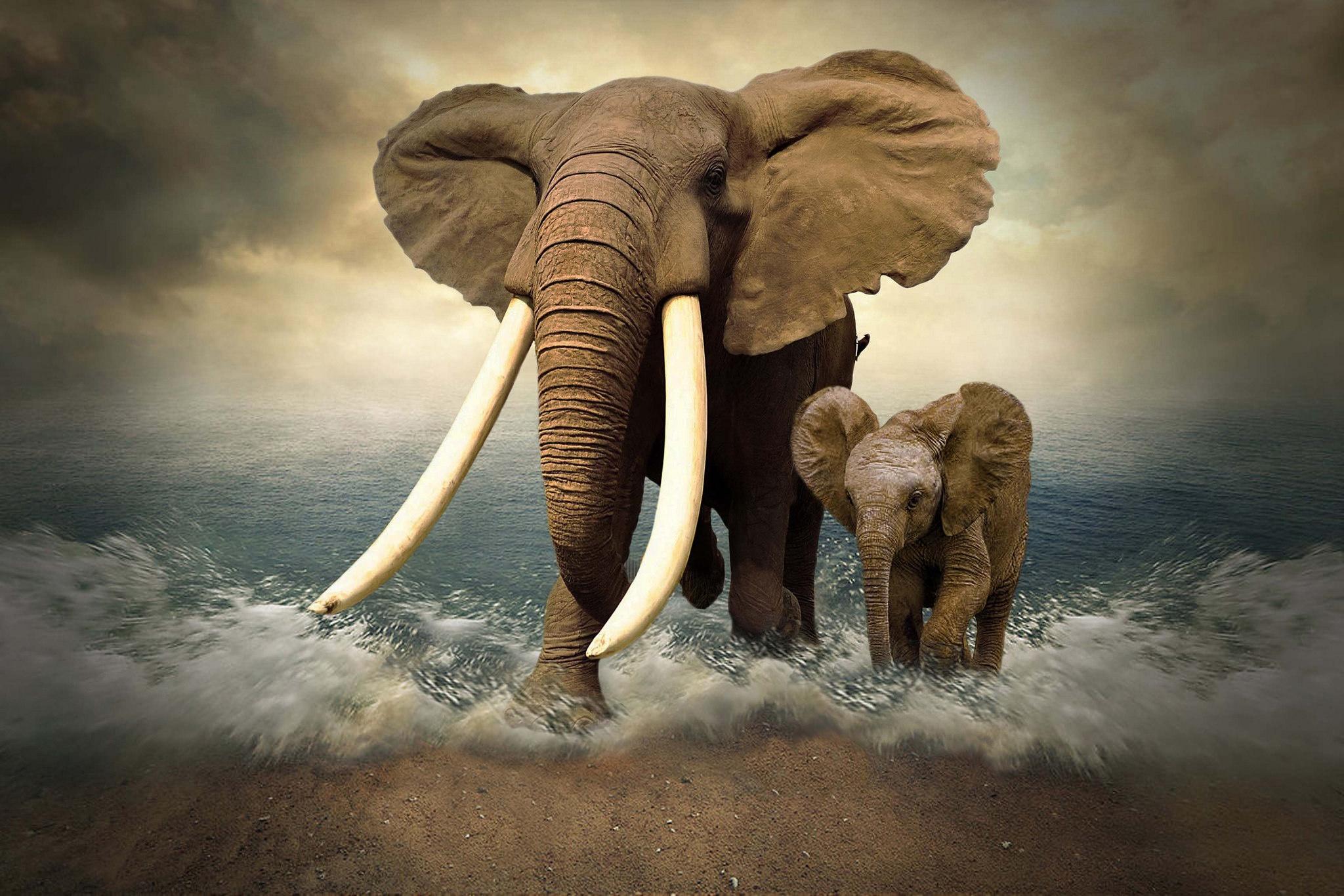 смотреть картинки со слонами очень удобный