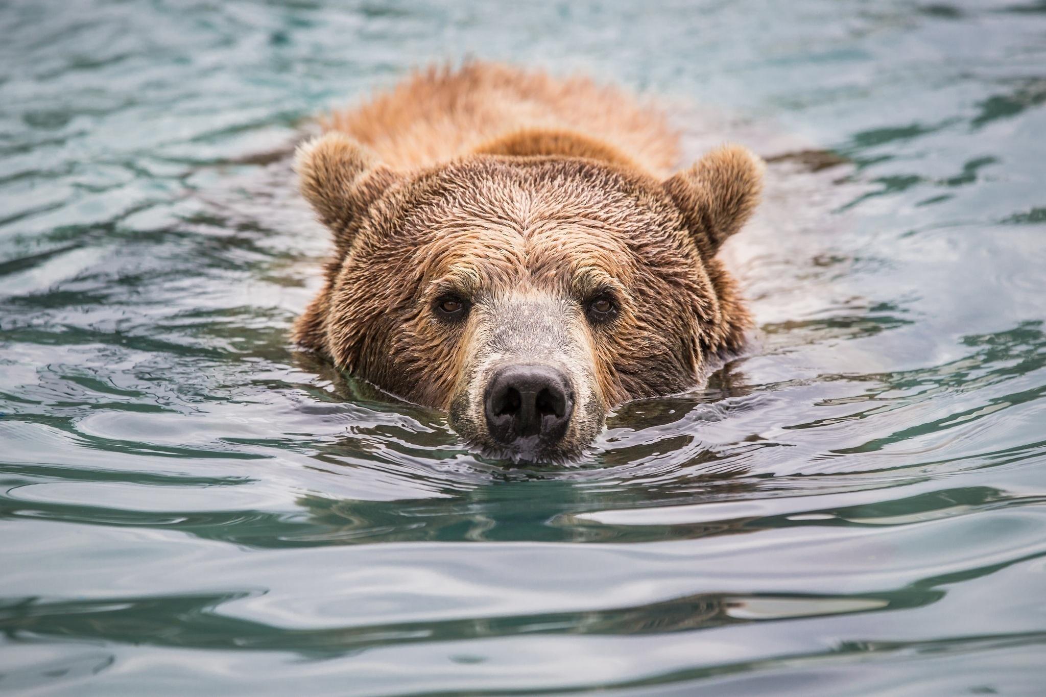 забудьте картинки мокрый медведь первый подарок, оспоримый