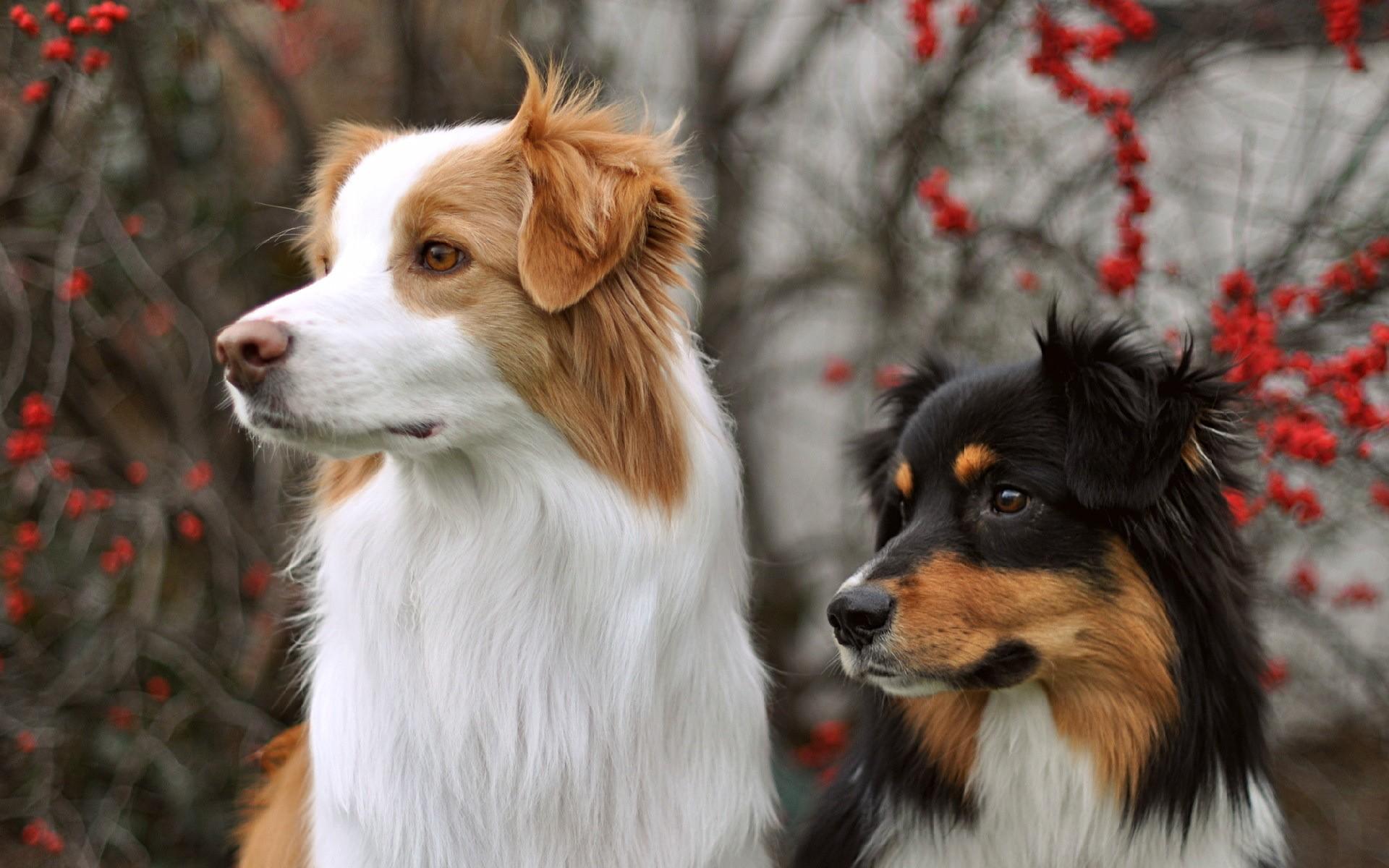 Картинки фото красивых собак