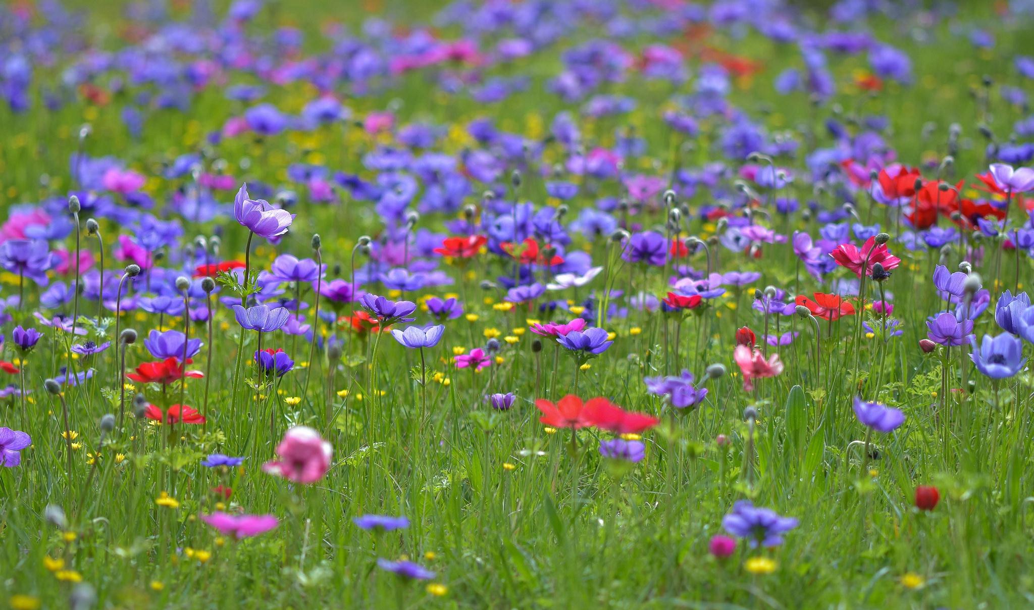 Картинки на рабочий стол поляна цветов