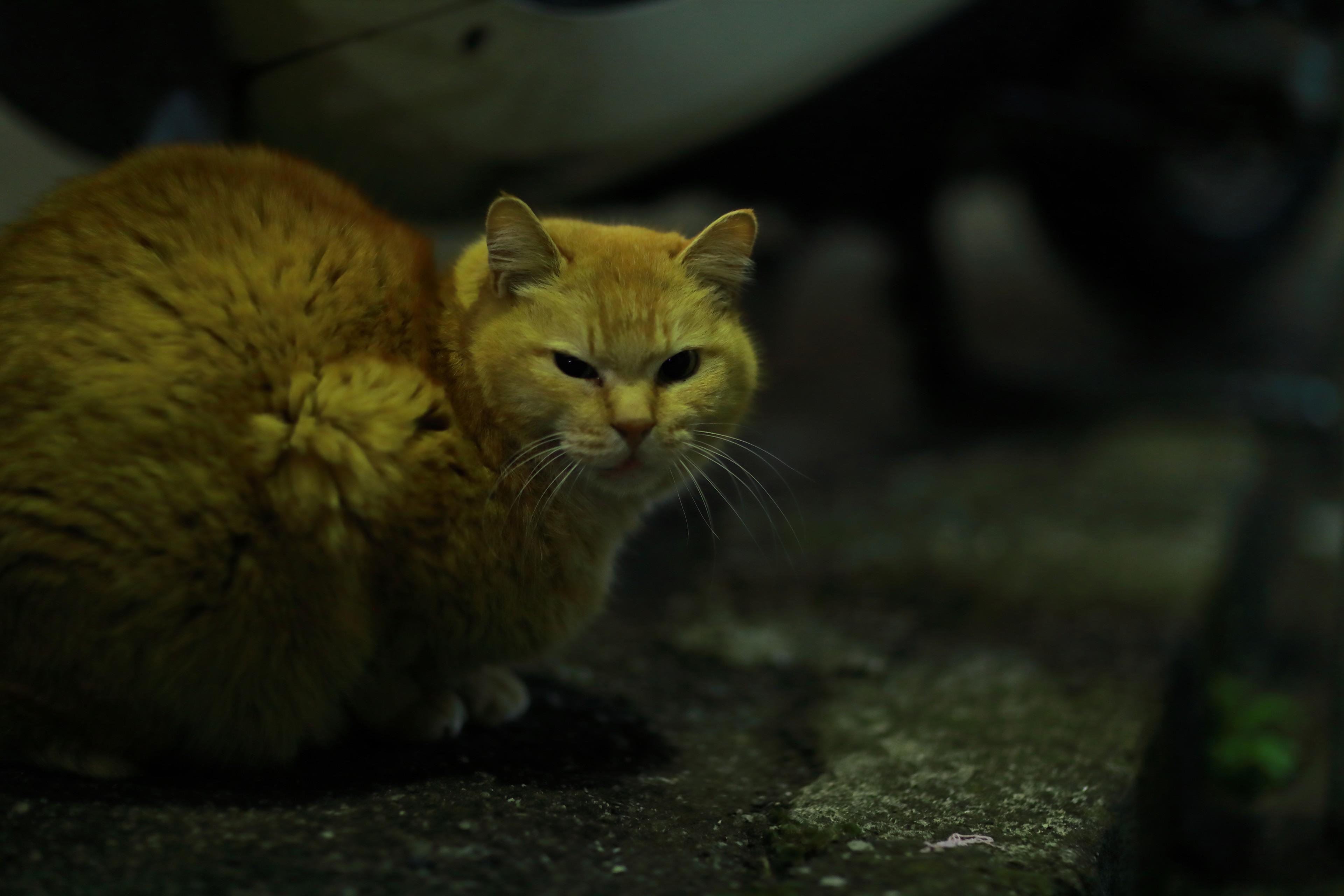 достижении картинки желтого котика вращение буровой