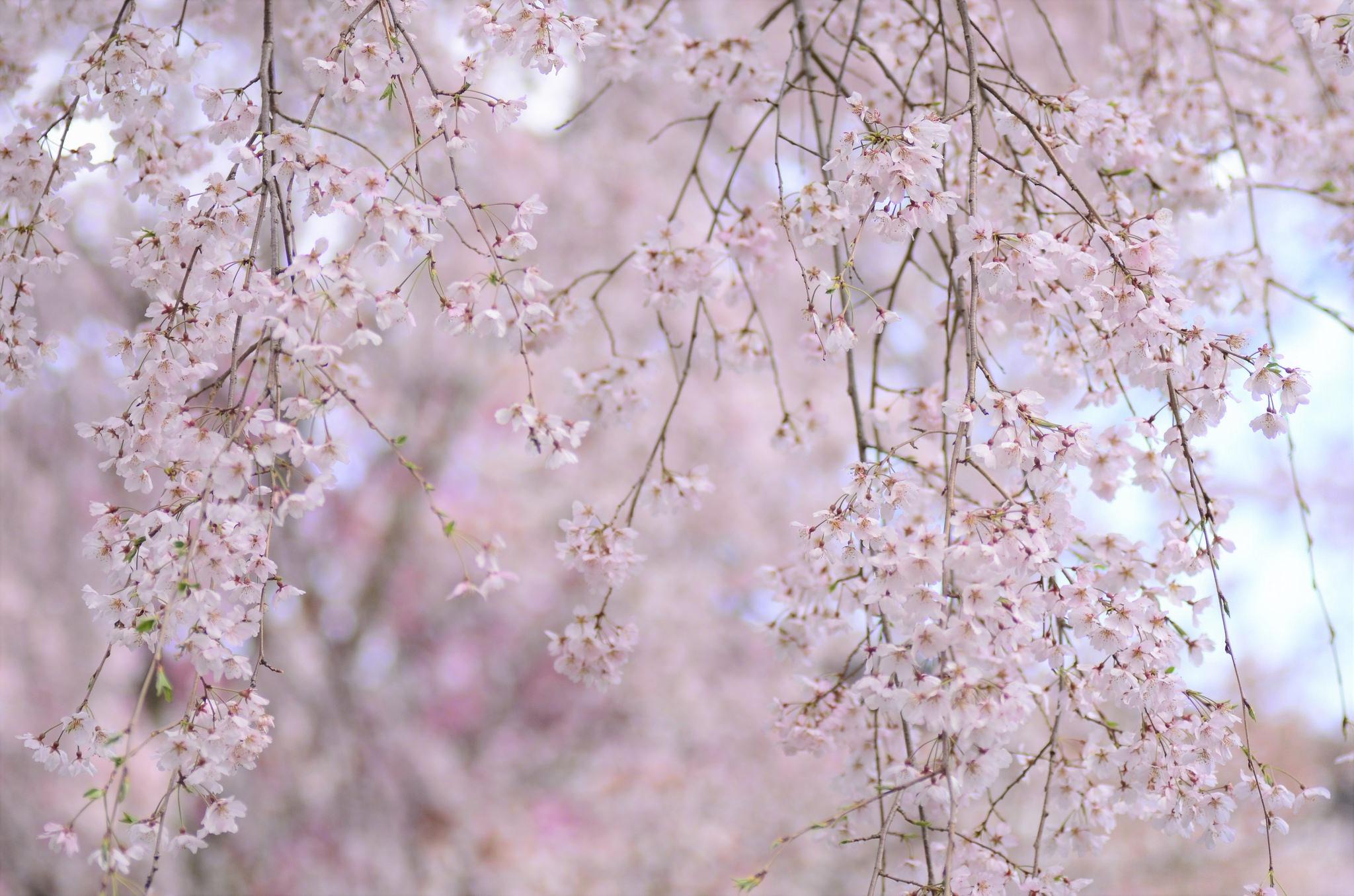 гифки красивые картинки цветение веточки вот