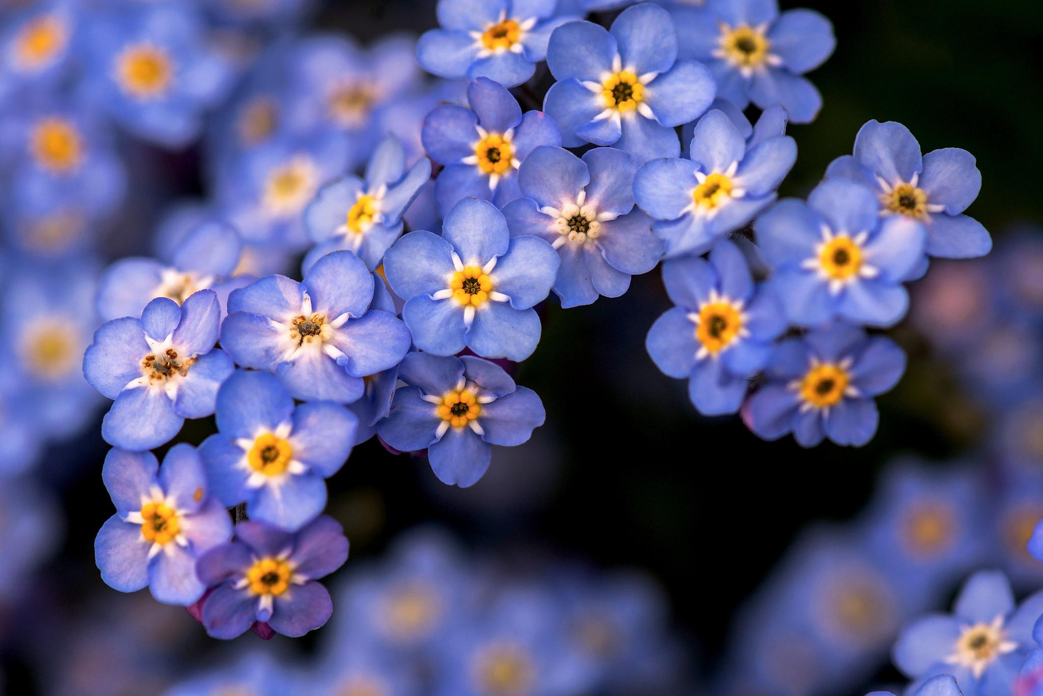Картинка мелких цветов