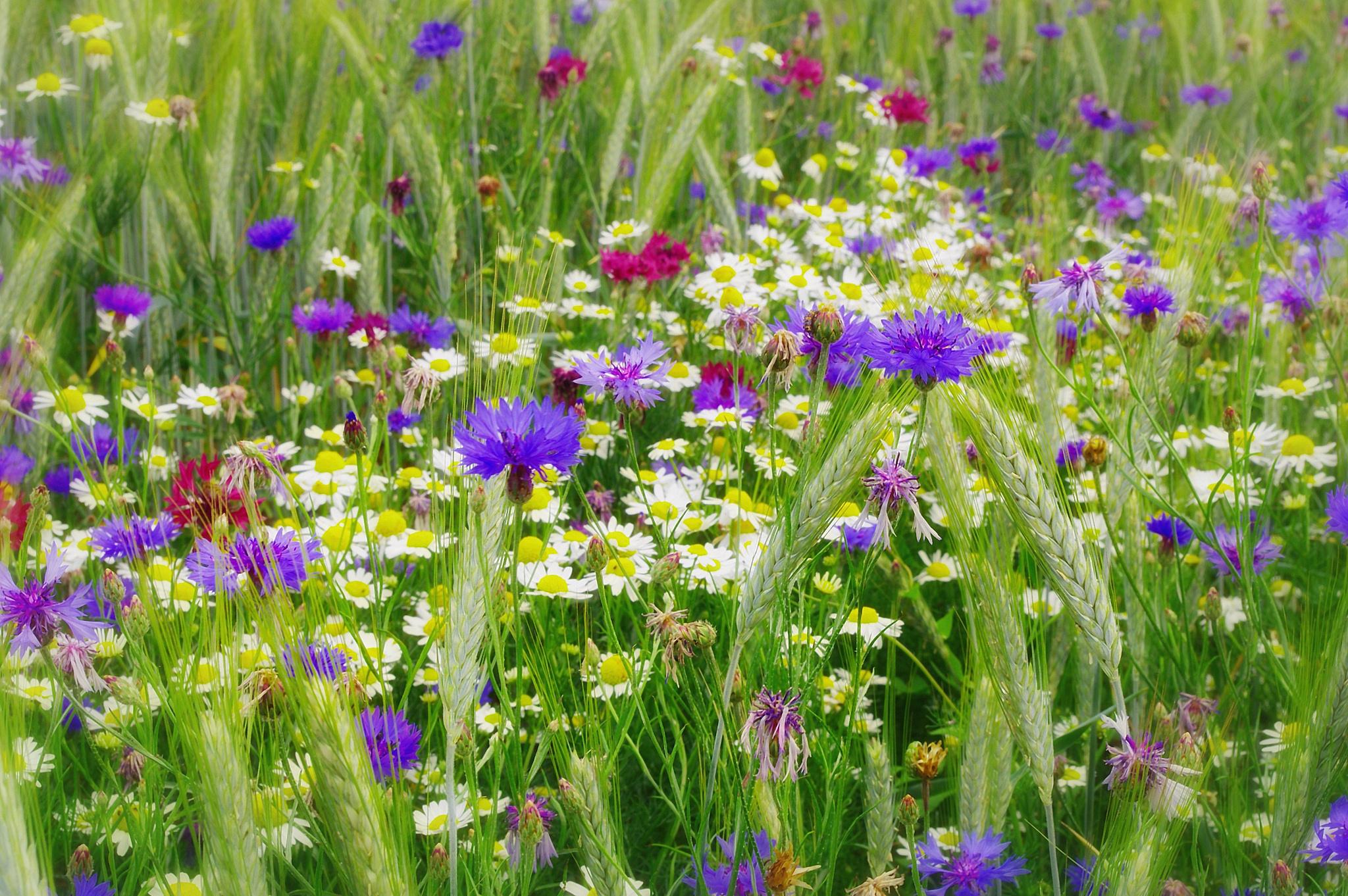Полевые травы букет картинки