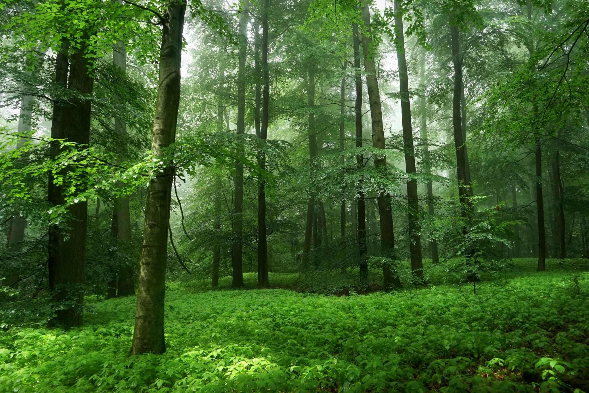 это картинки лес картинки лес дате