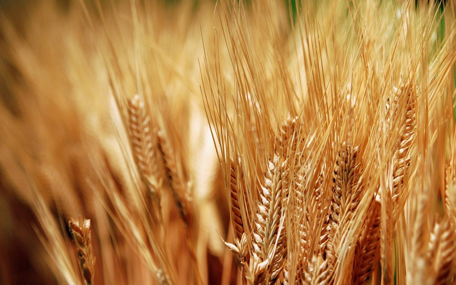 кабинете зерновые картинки для презентации инету дали