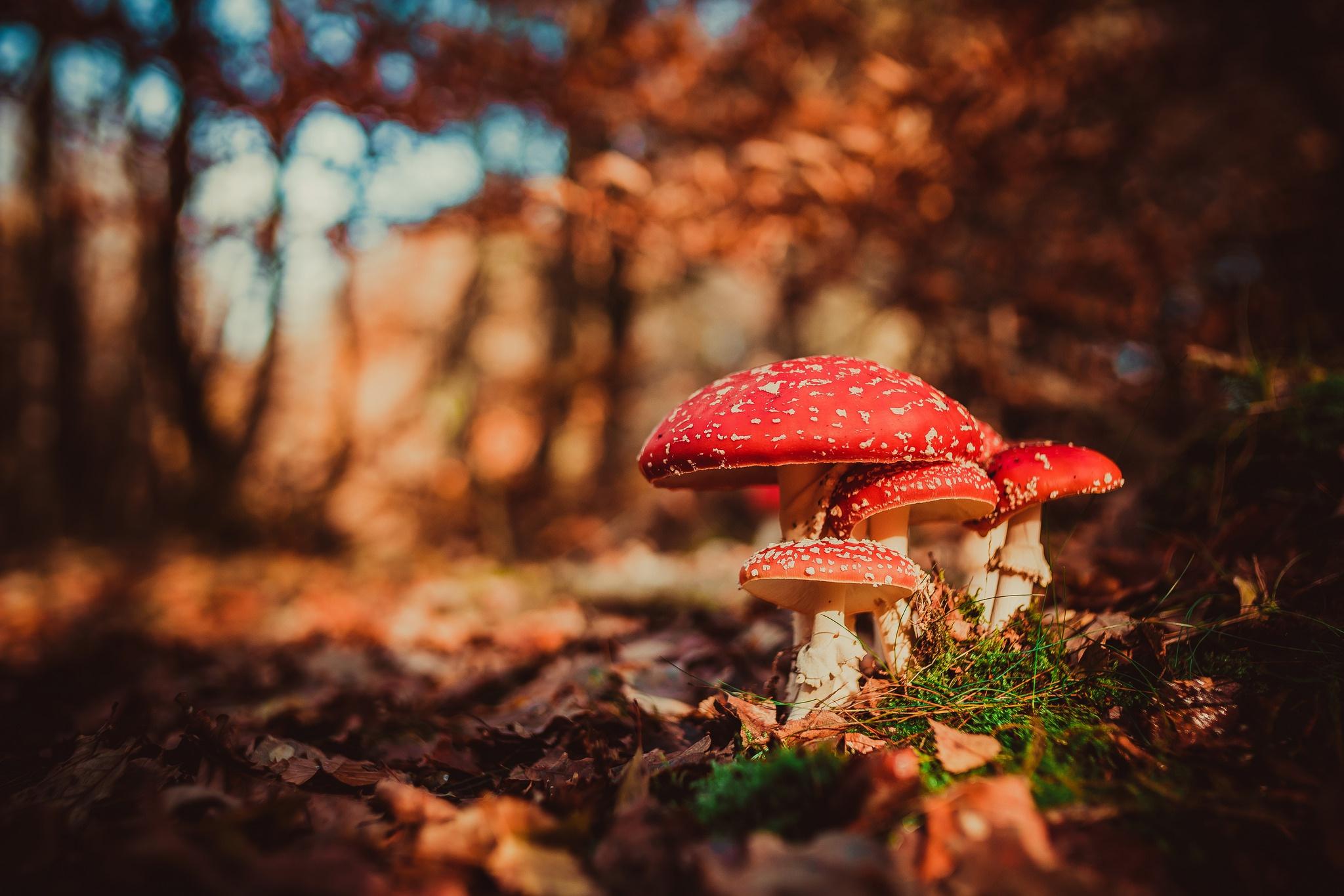 ангел черт картинки на рабочий стол лес осень грибы задачей
