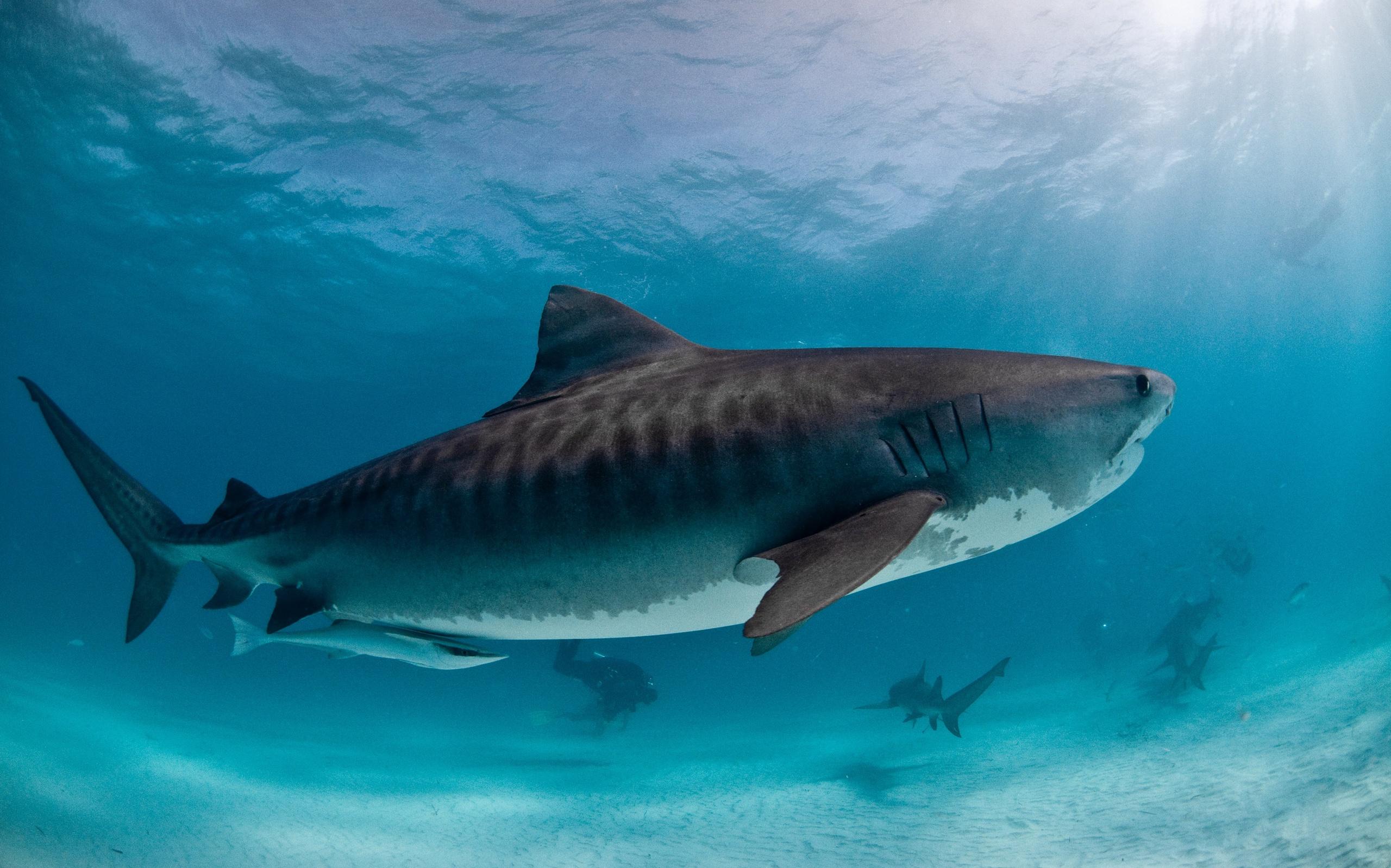 лучшие картинки акул свои годы может