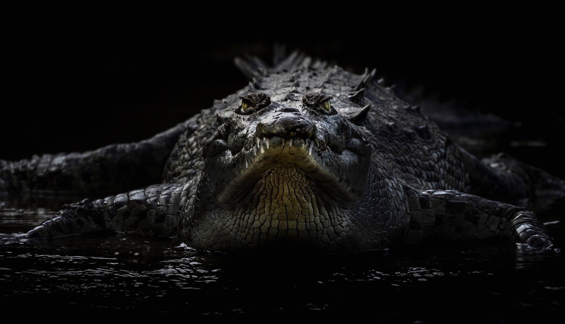 Пасть крокодила бесплатно