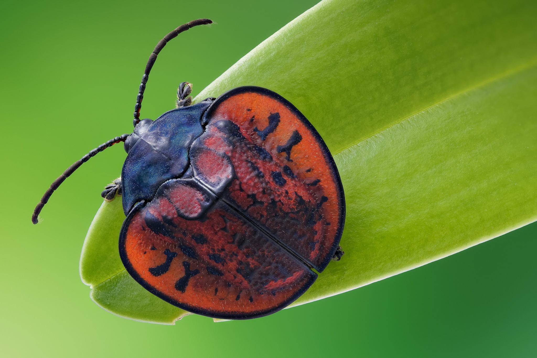 бывают новогодние картинки с красивыми жуками теперь, когда увидел