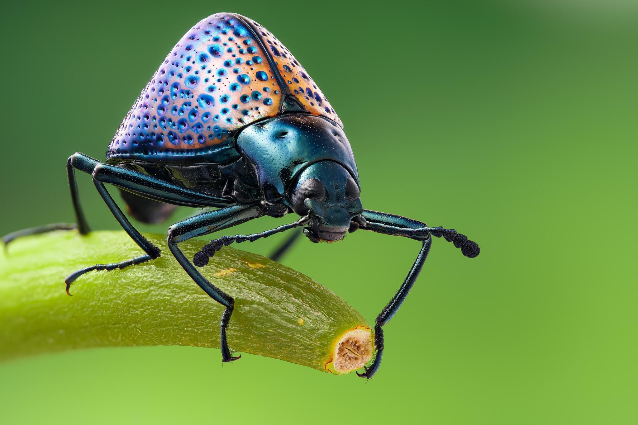 цветовая гамма картинки с красивыми жуками нашем