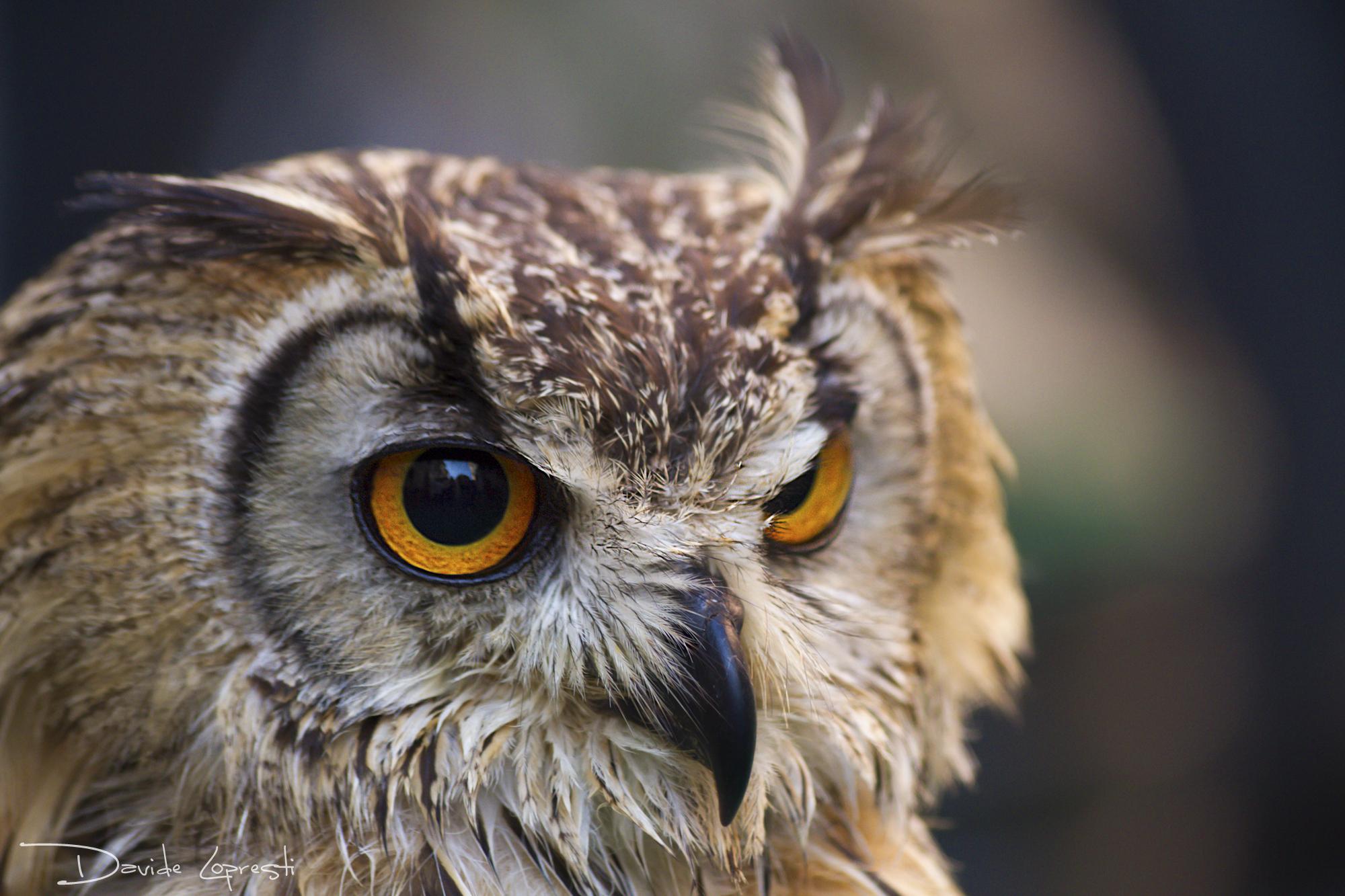 Красивые фото и картинки сов