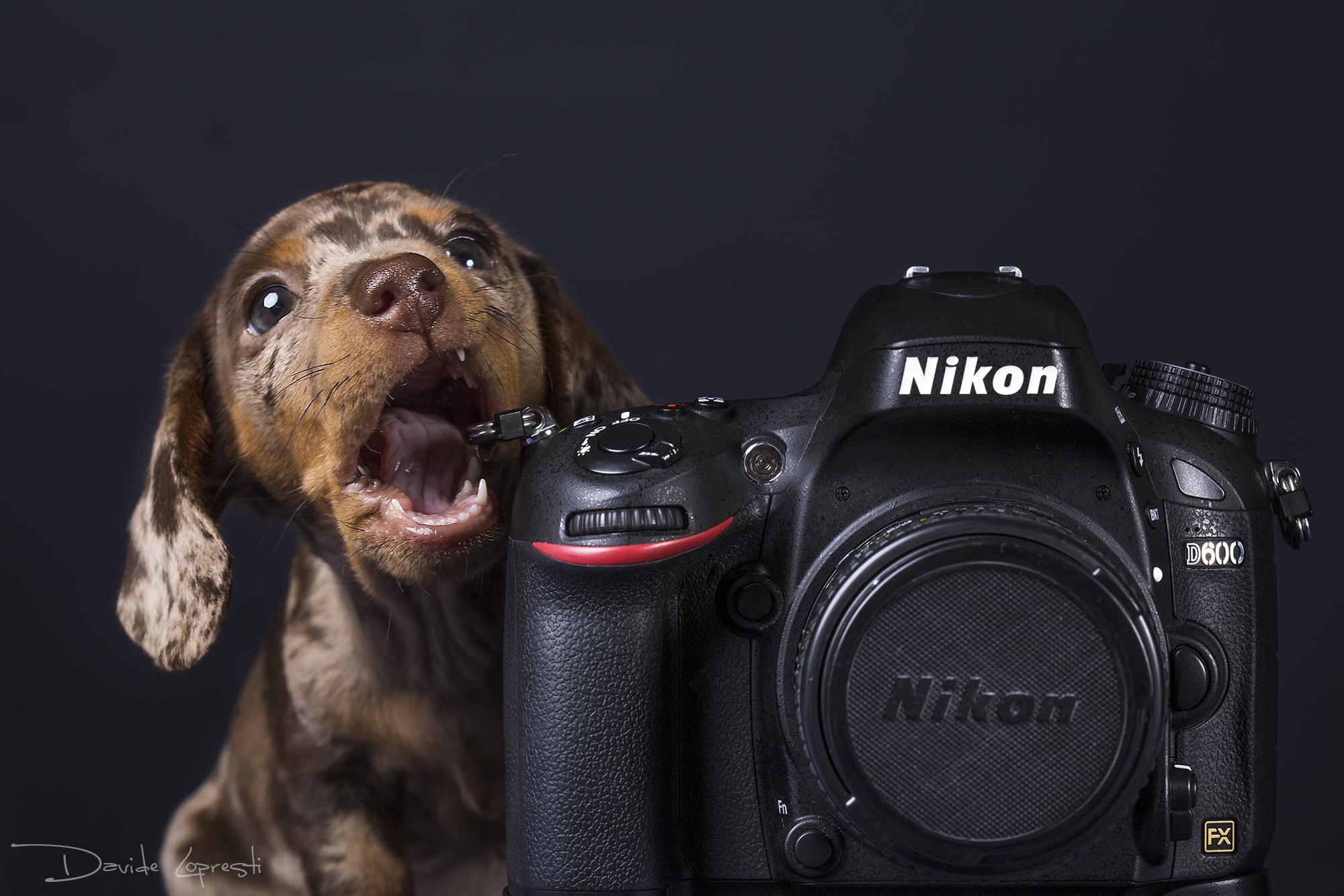 эти фото смешного фотоаппарата они