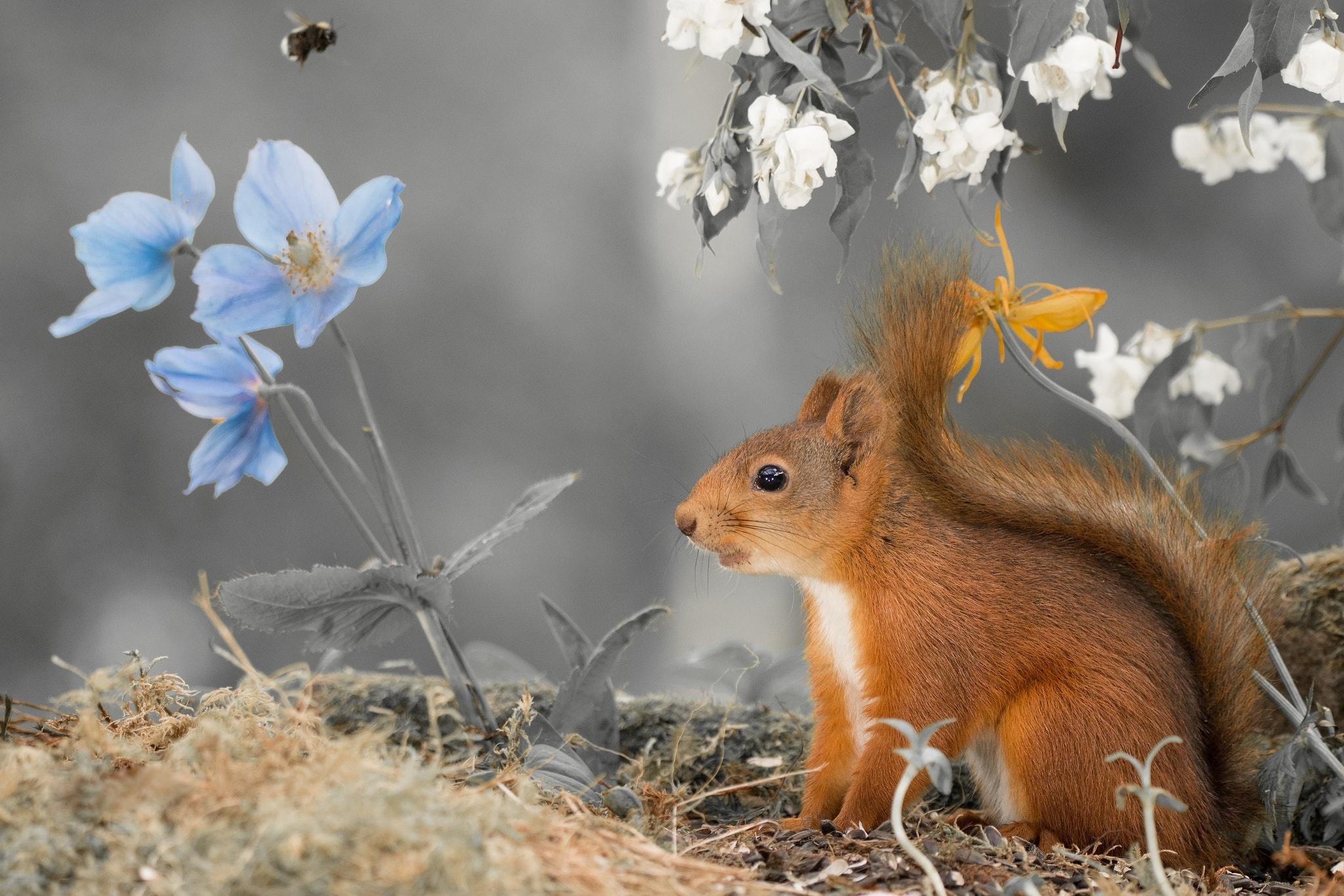 стоит картинки весеннее пробуждение животных дискуссий
