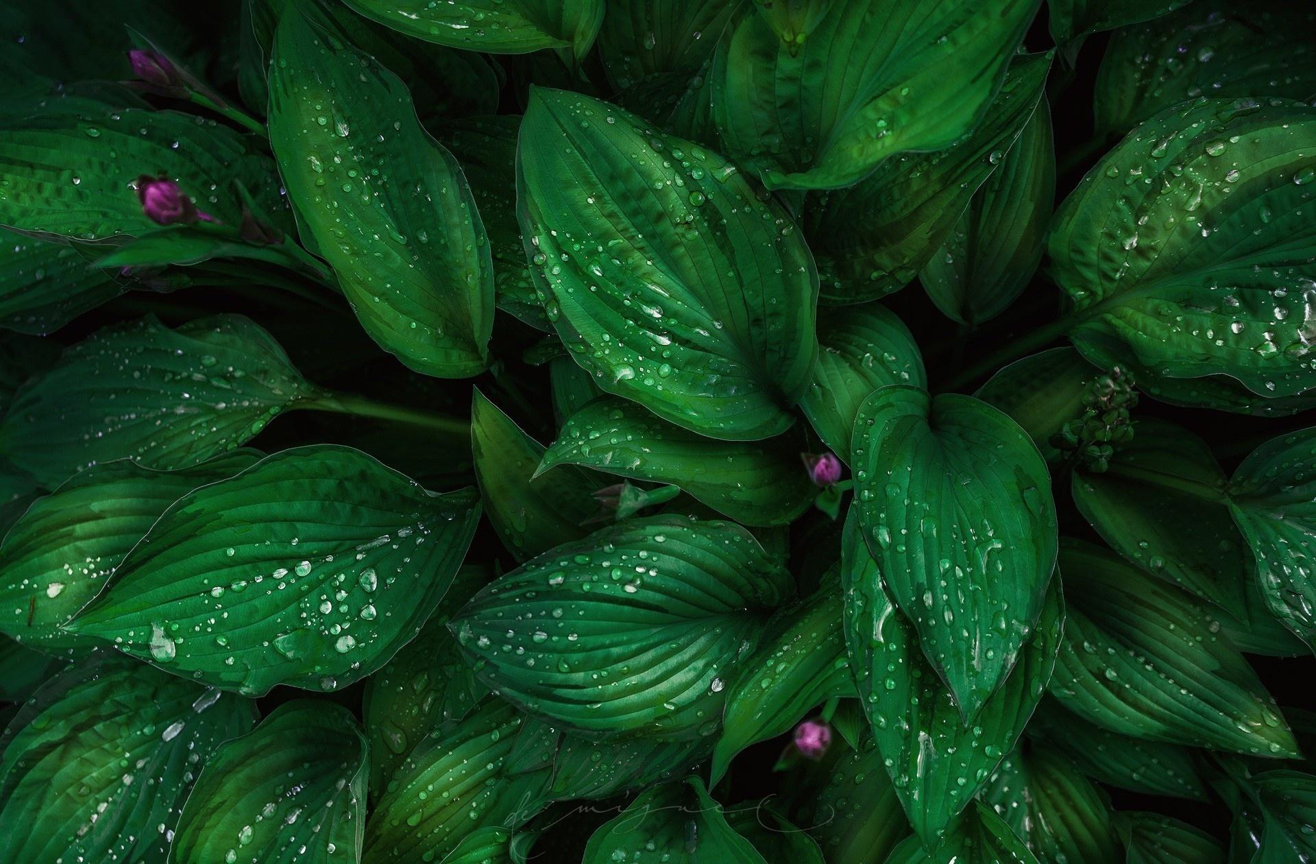 картинки на рабочий зеленого цвета прометея