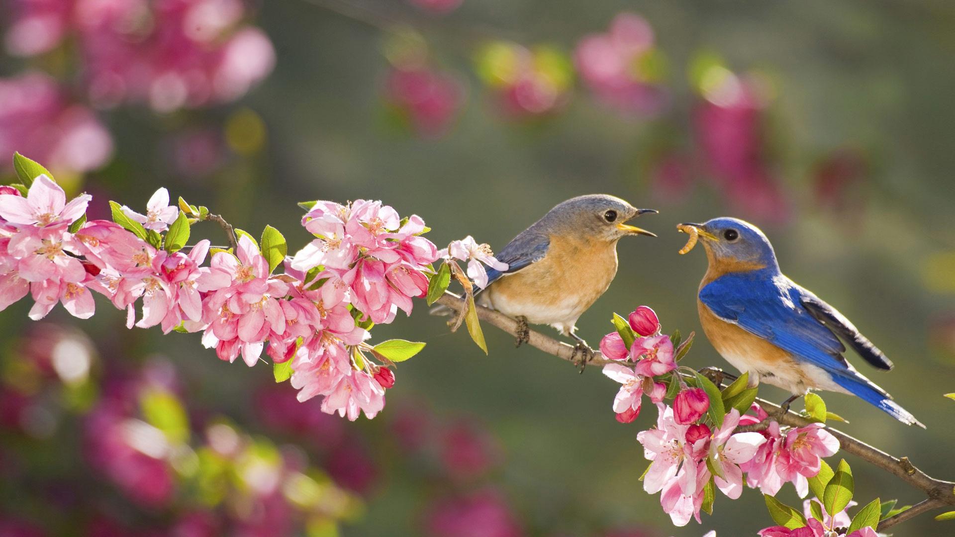 Картинки с птичками цветочками