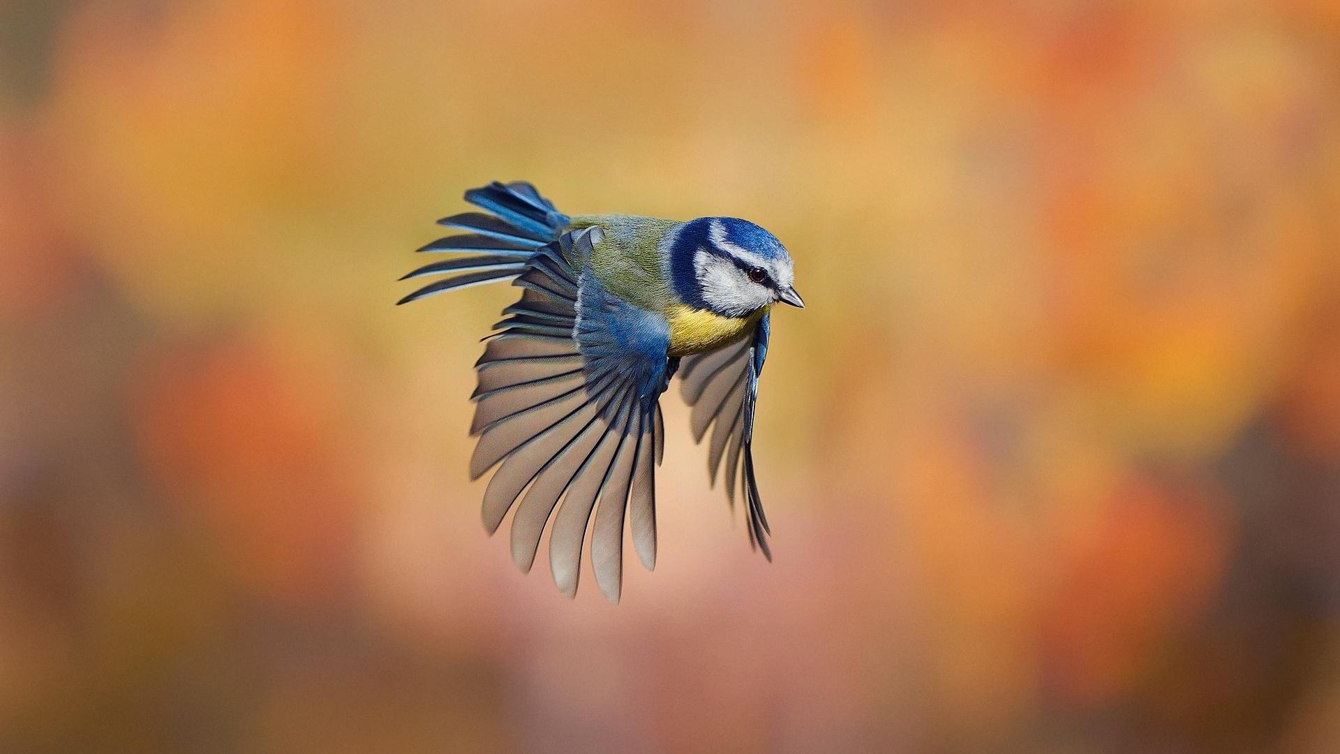 птички в полете картинки штативов для