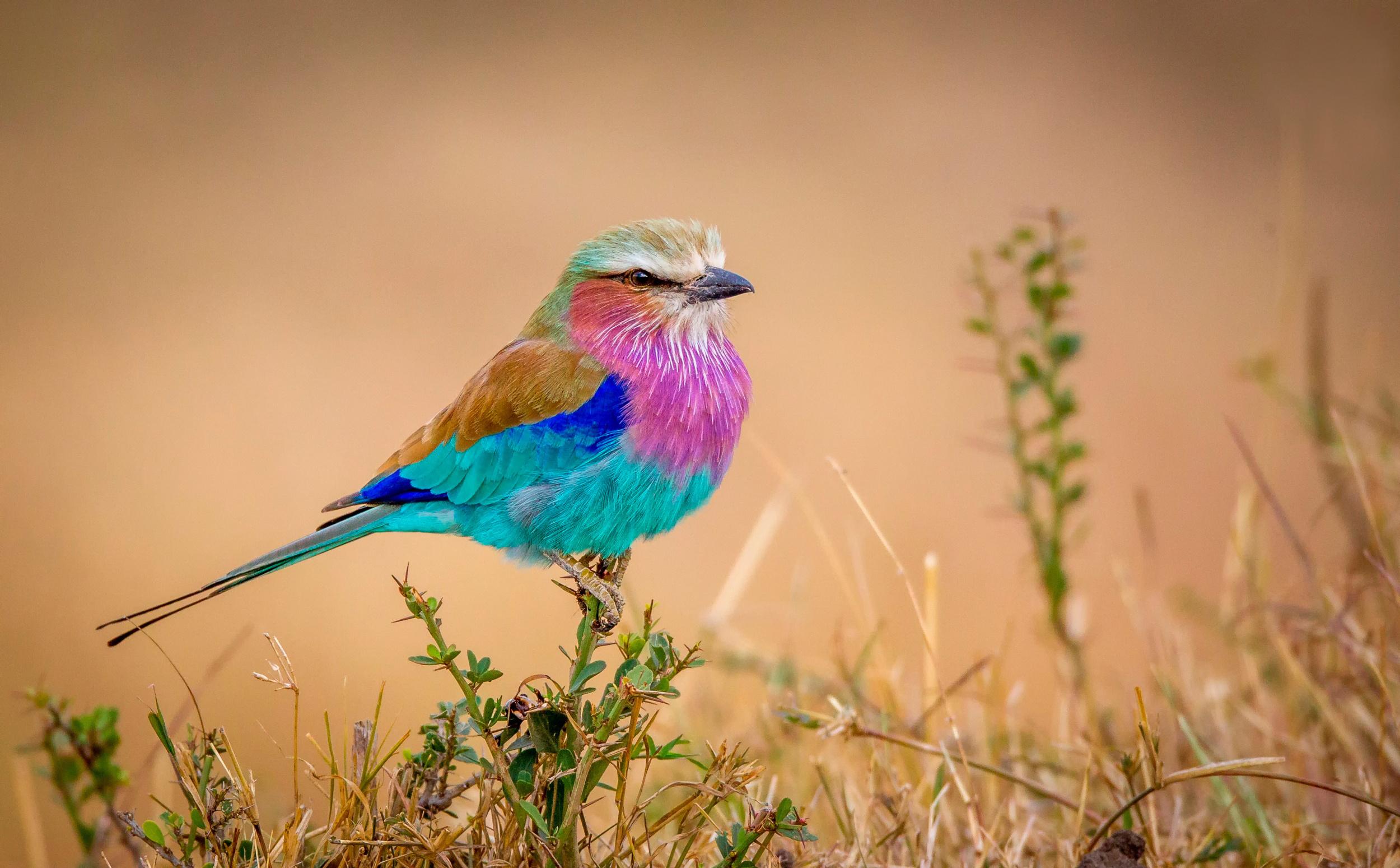 разноцветные птицы фотографии мама