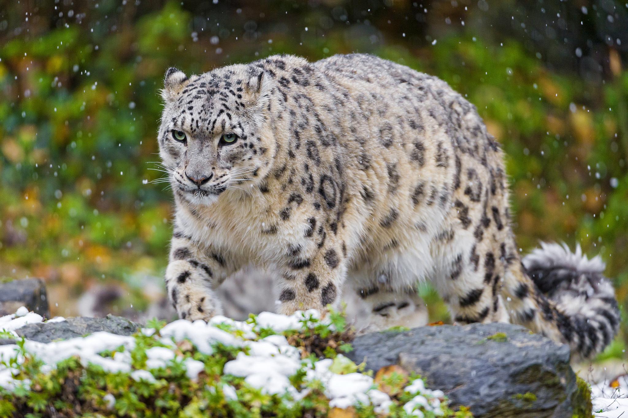 зависти только самые красивые фото животных с названиями для