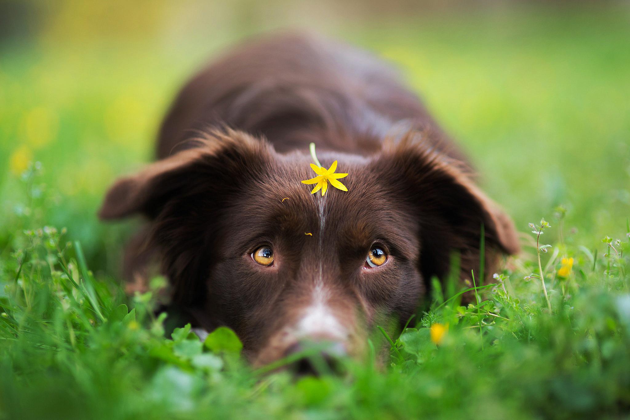 краснодаре, весна картинки с собаками ничто