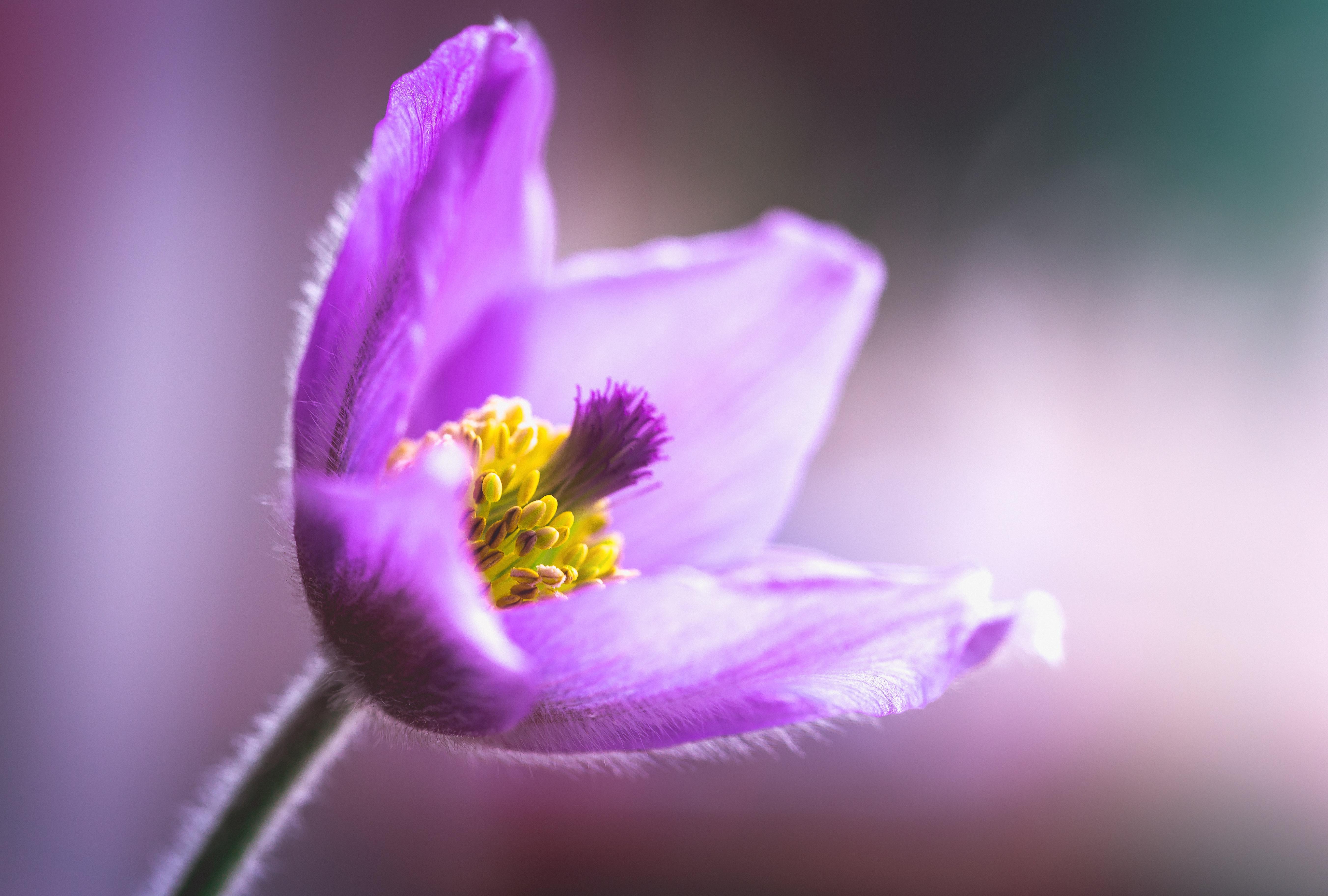 картинка спящего цветка этого изделия может