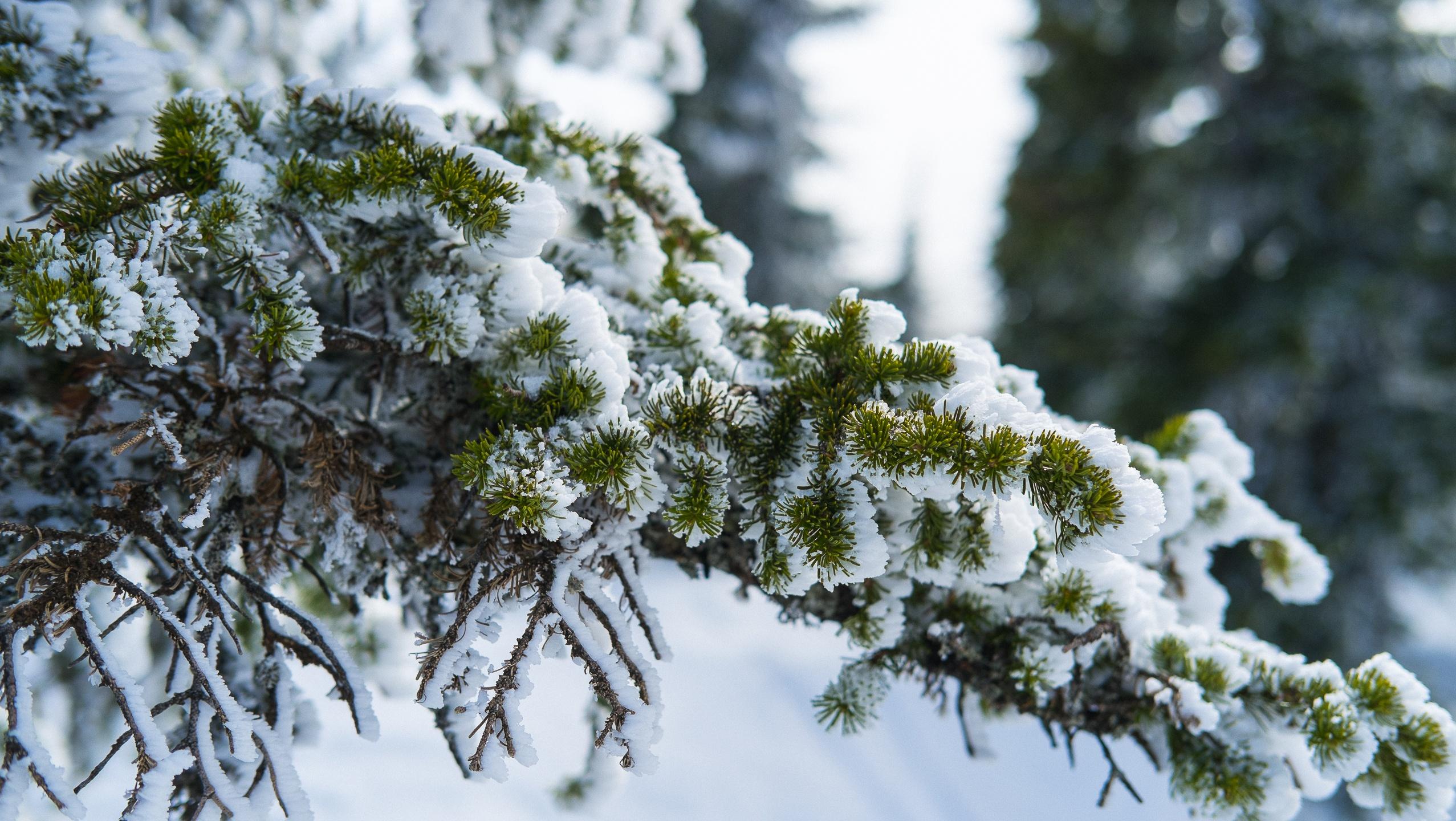 веточка в снегу фото список девяти