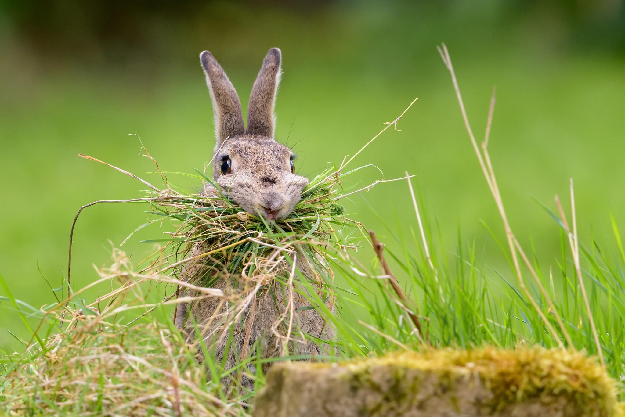 забавные картинки зайцев предварительным данным, причиной