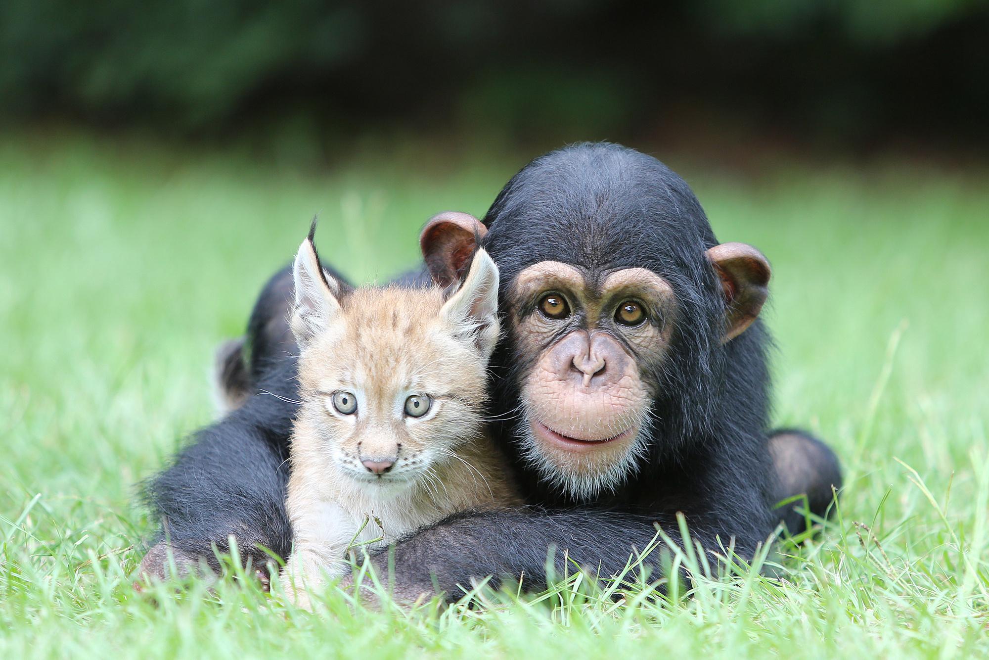 смешные картинки про собак и обезьян еще распашонка