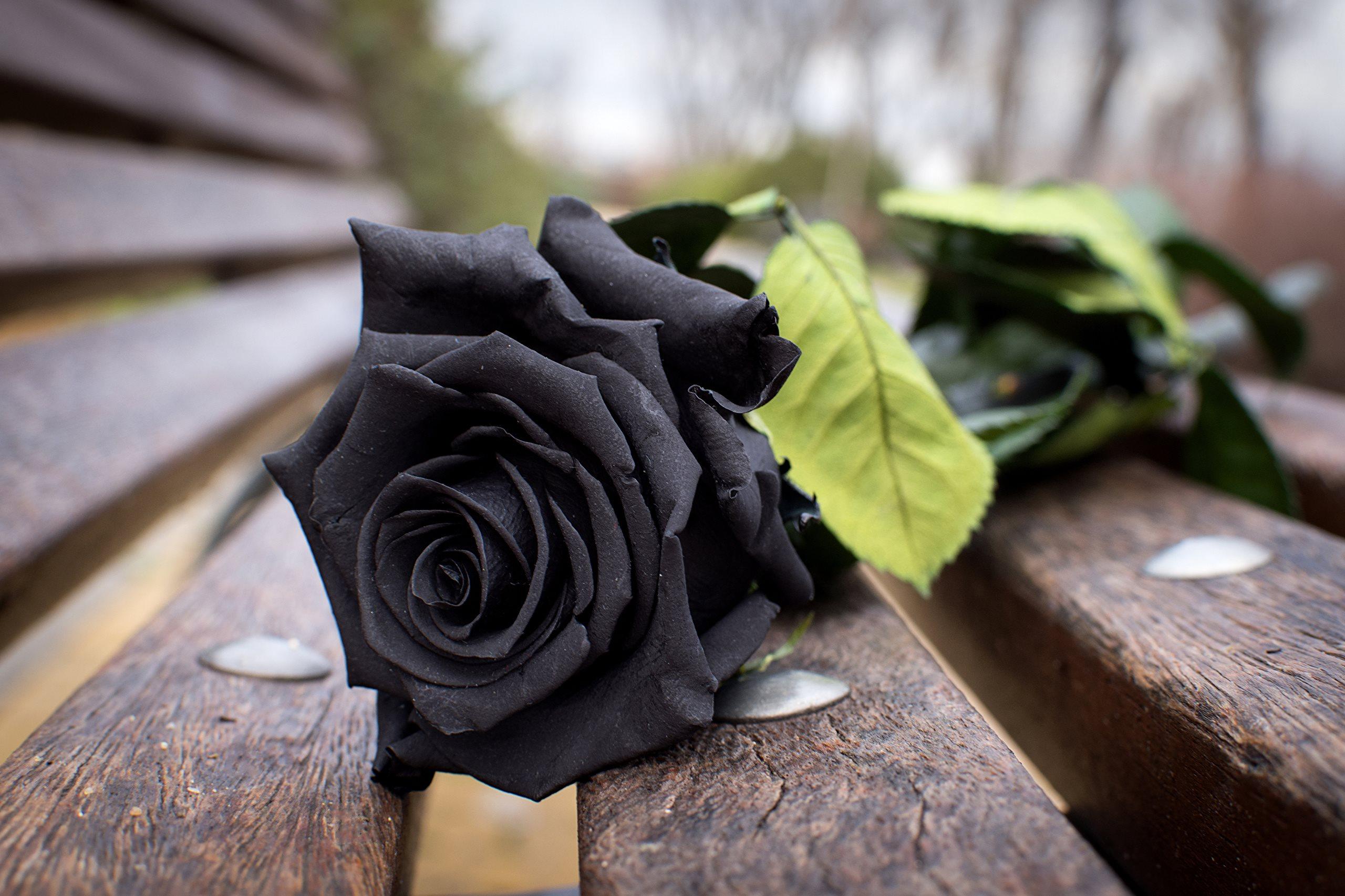 Красивые черные картинки фото