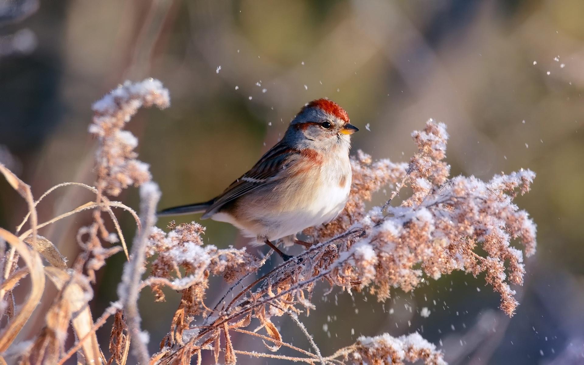 птица заморозок картинки видео