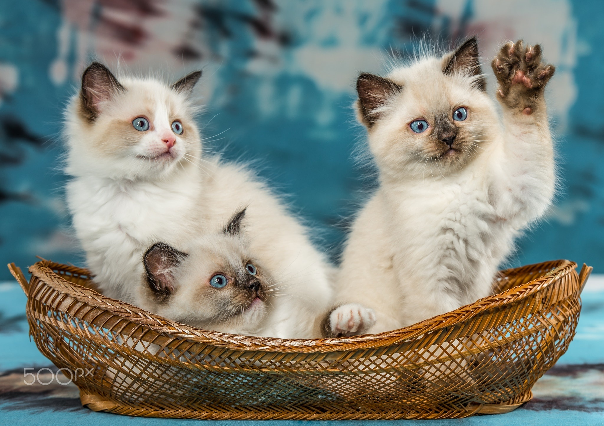 Картинки всяких котят название этой