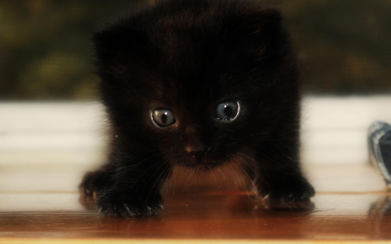 Маленький черный котенок картинка